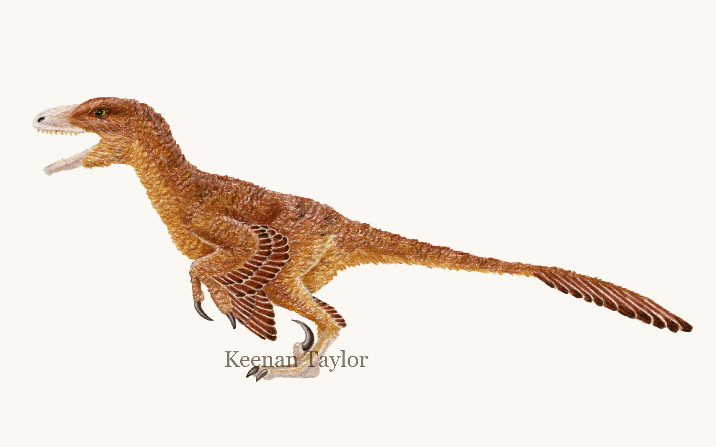 Deinonychus antirrhopus (Sinornithosaurus millennia)