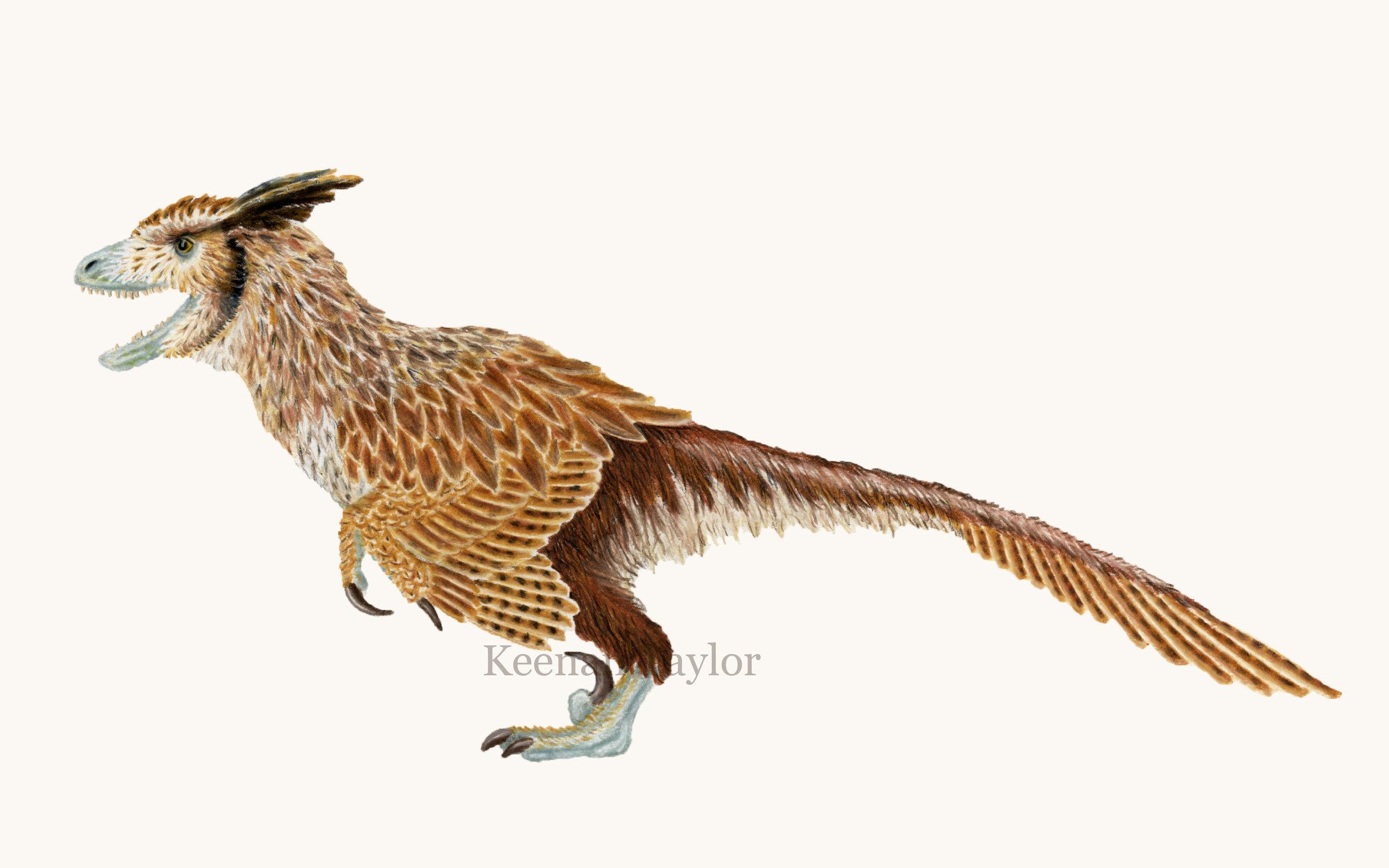 Deinonychus antirrhopus (great horned owl)