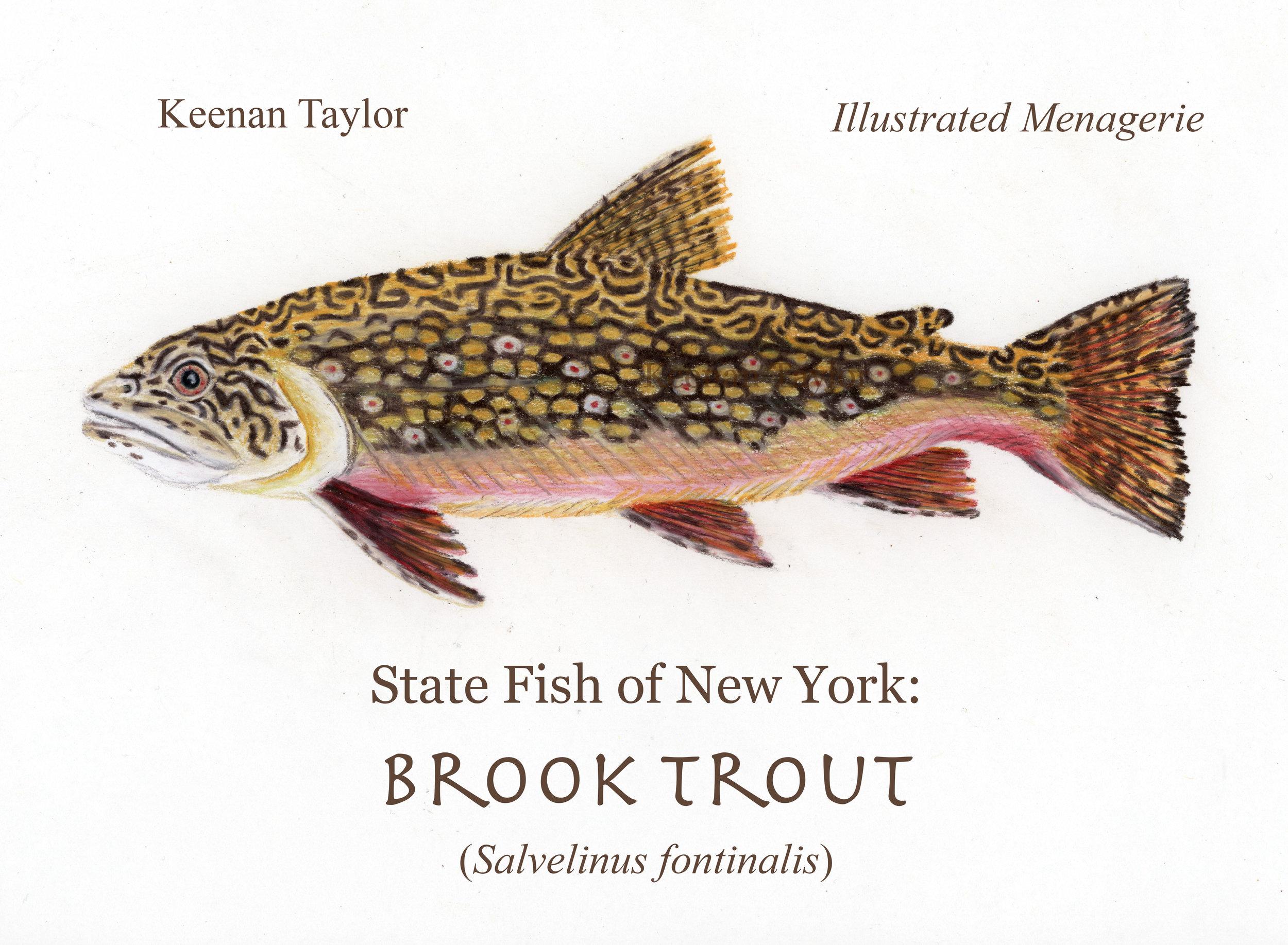 Brook Trout (Salvelinus frontinalis)