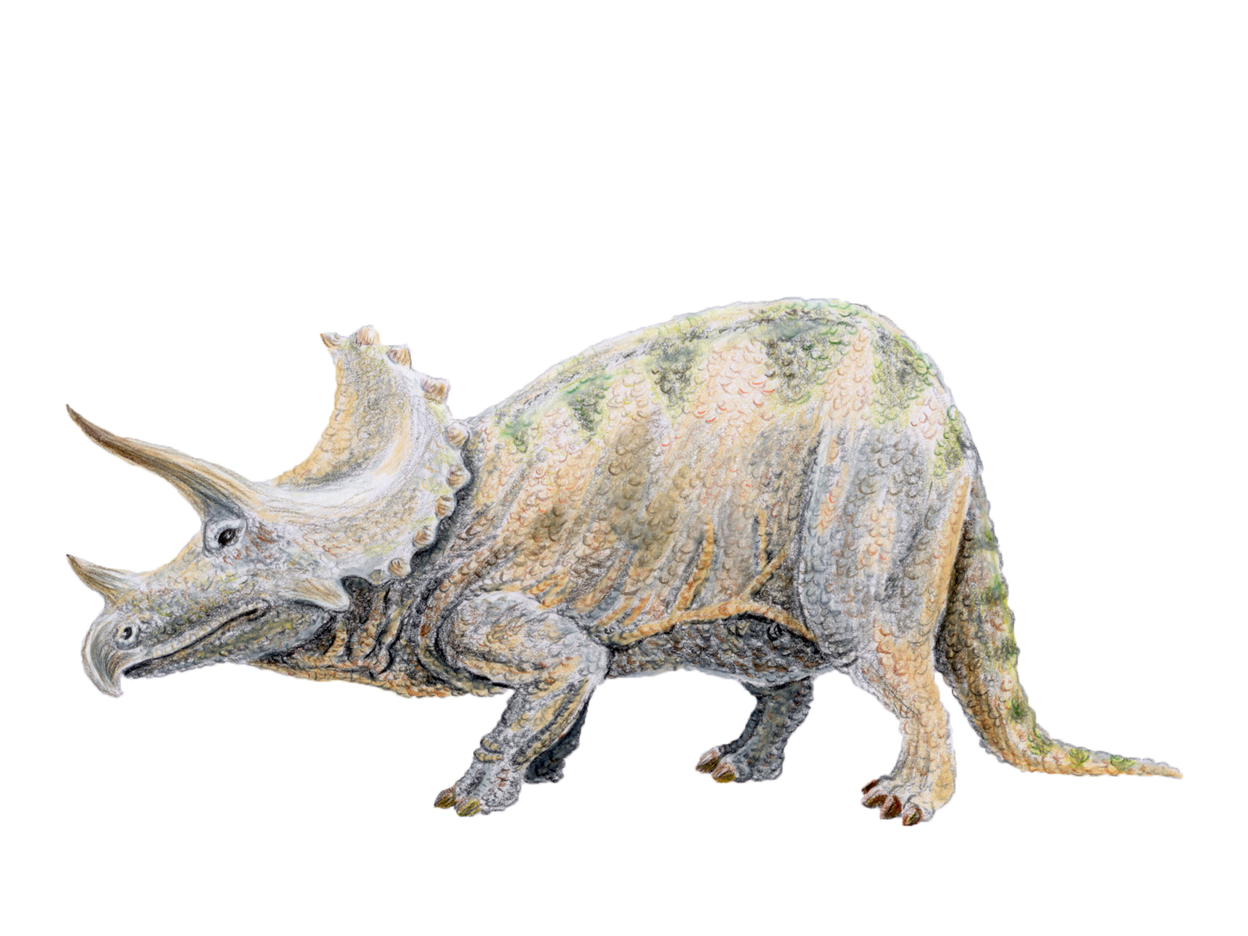 Triceratops prorsus (1910's style)