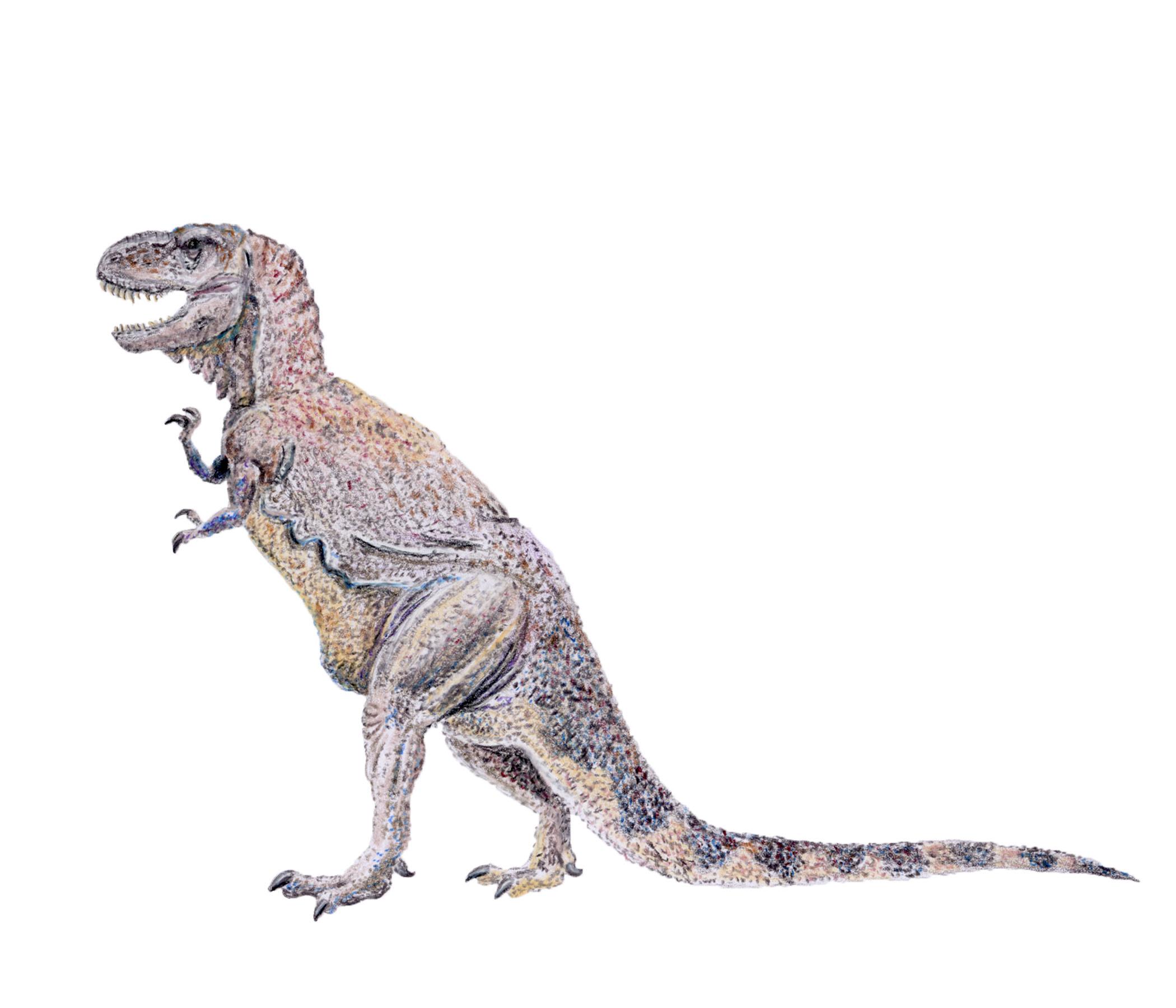 Tyrannosaurus rex (1910's style)