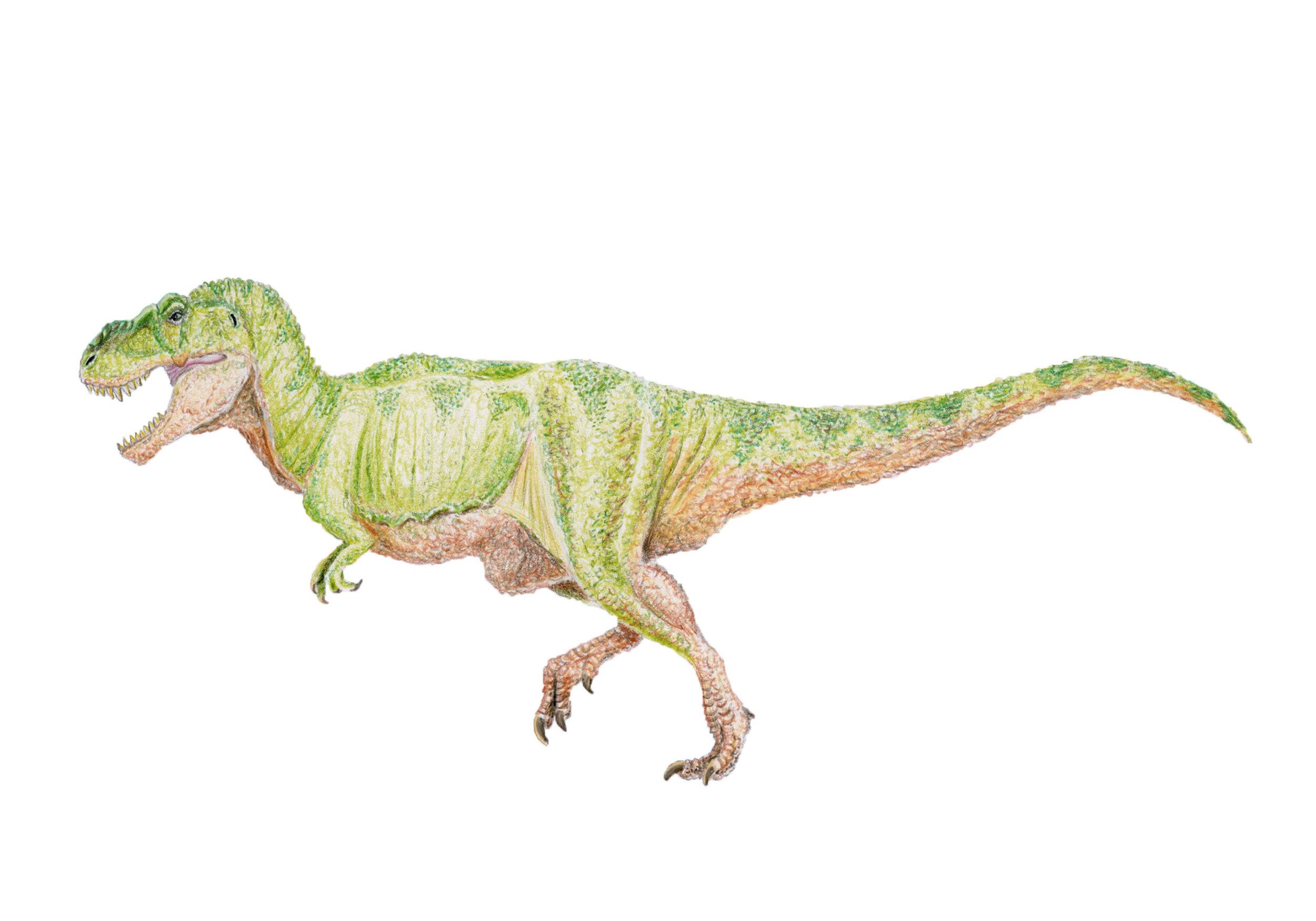 Tyrannosaurus rex (1970's-1980's style)