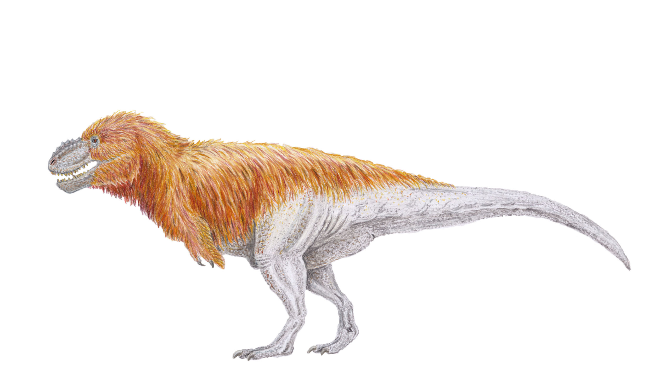 Tyrannosaurus rex (contemporary)