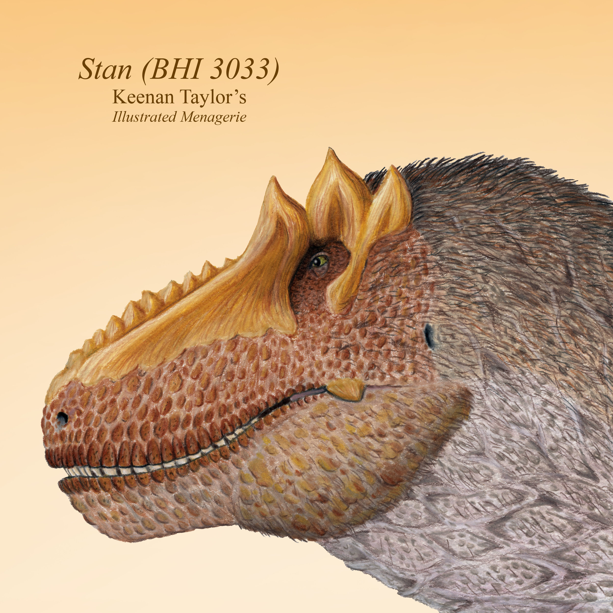 Stan (Male Tyrannosaurus rex)