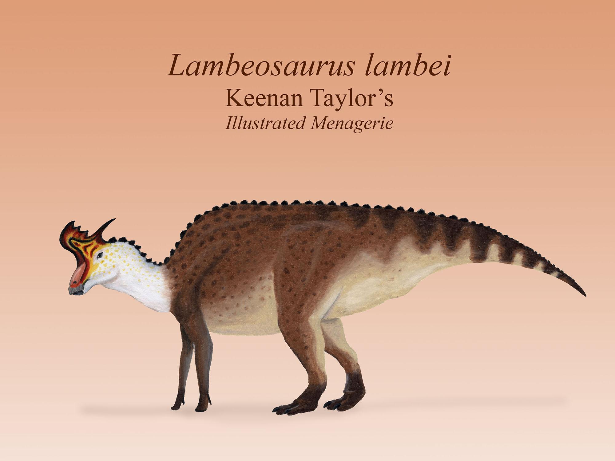 Lambeosaurus lateral