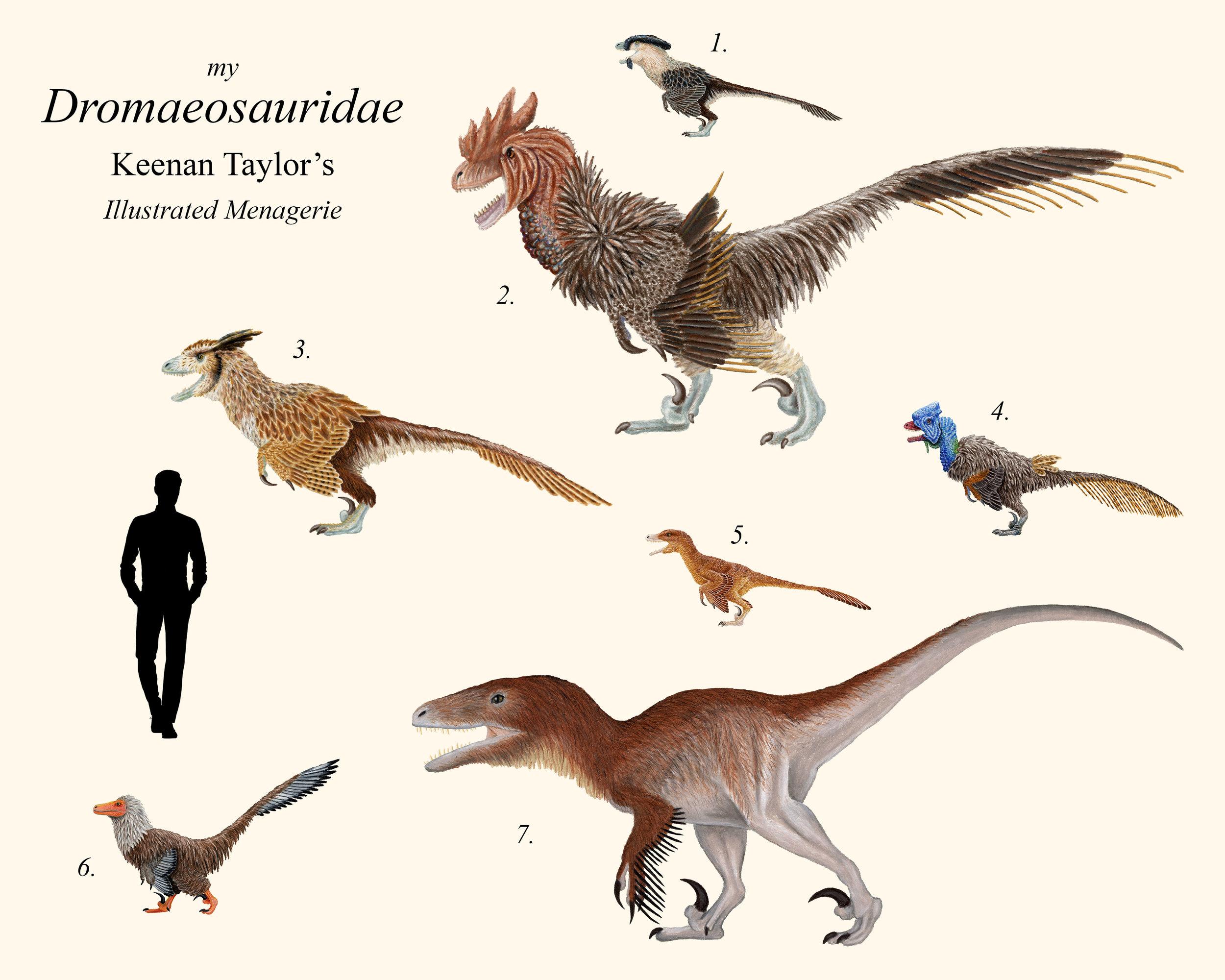 My Dromaeosauridae