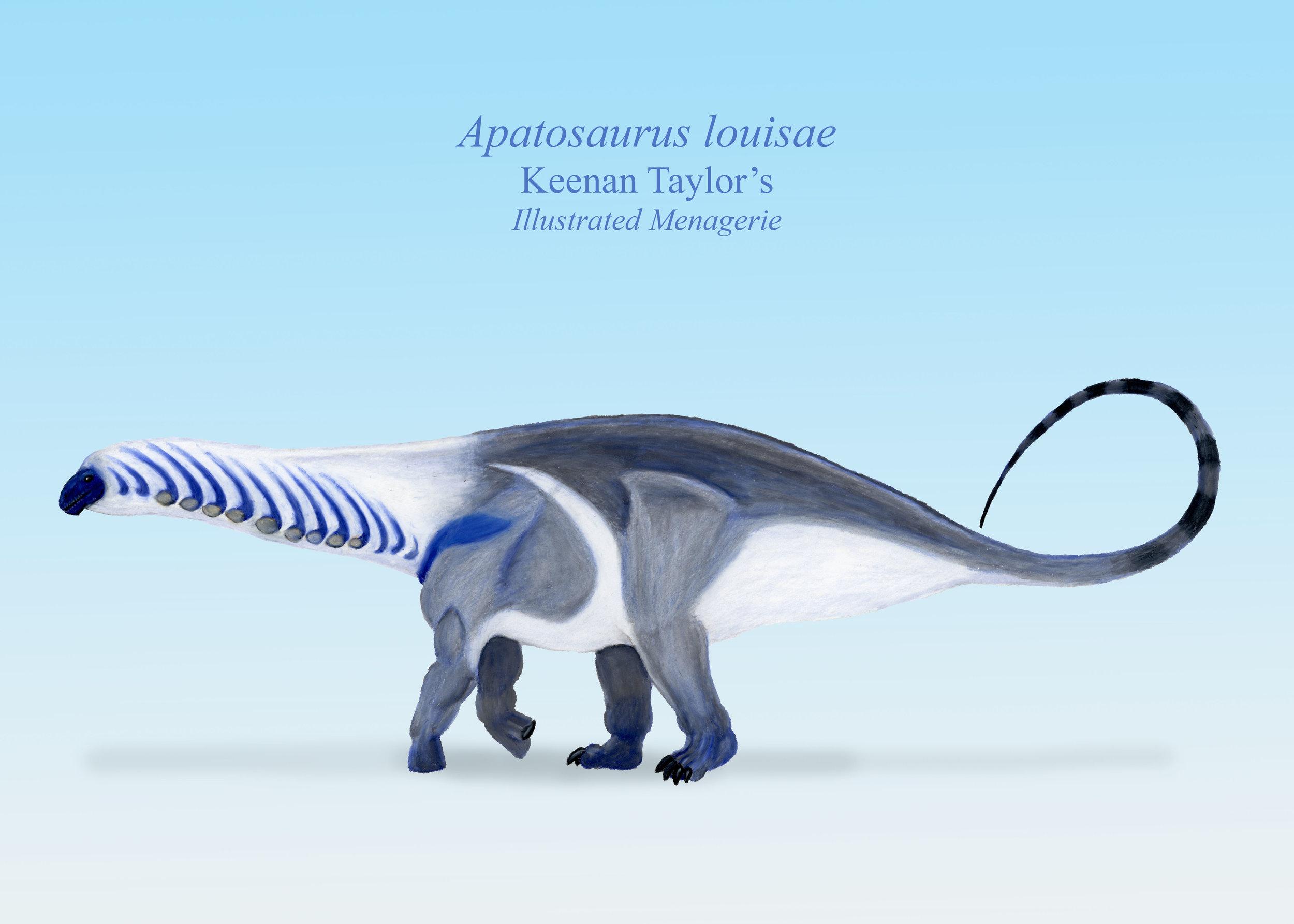 Apatosaurus lateral