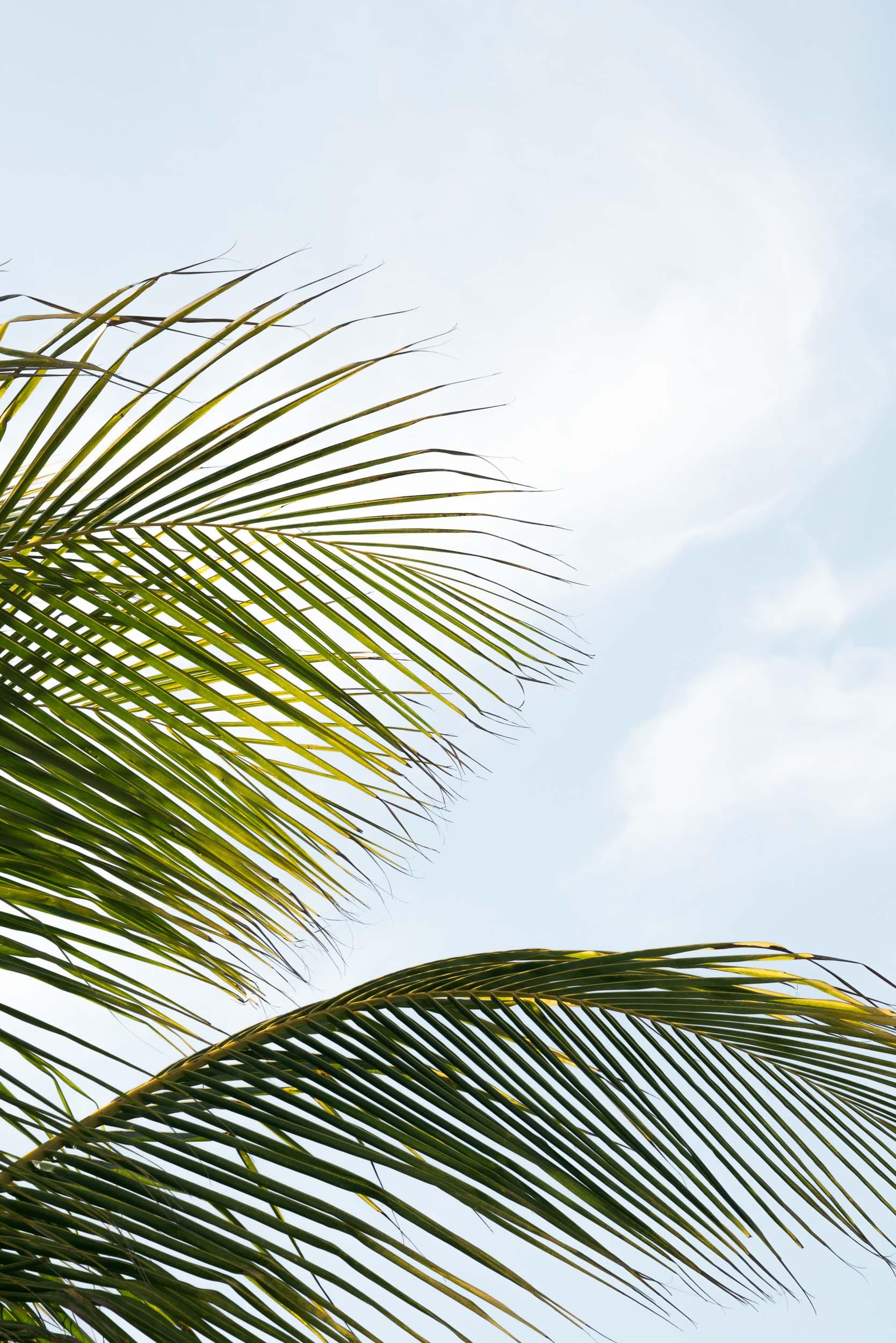 jamaica-12.jpg