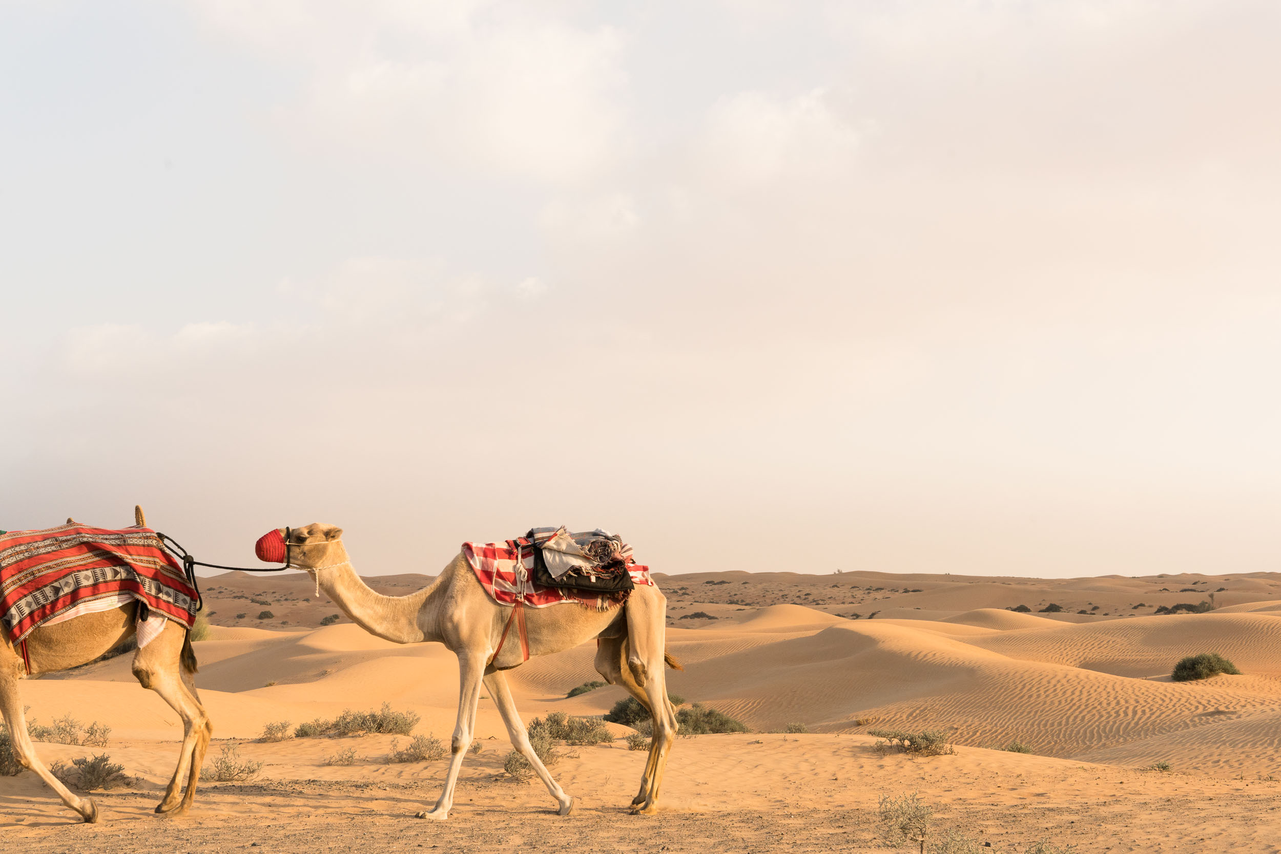 the_getaway_edit_al_maha_desert_resort_and_spa-8.jpg