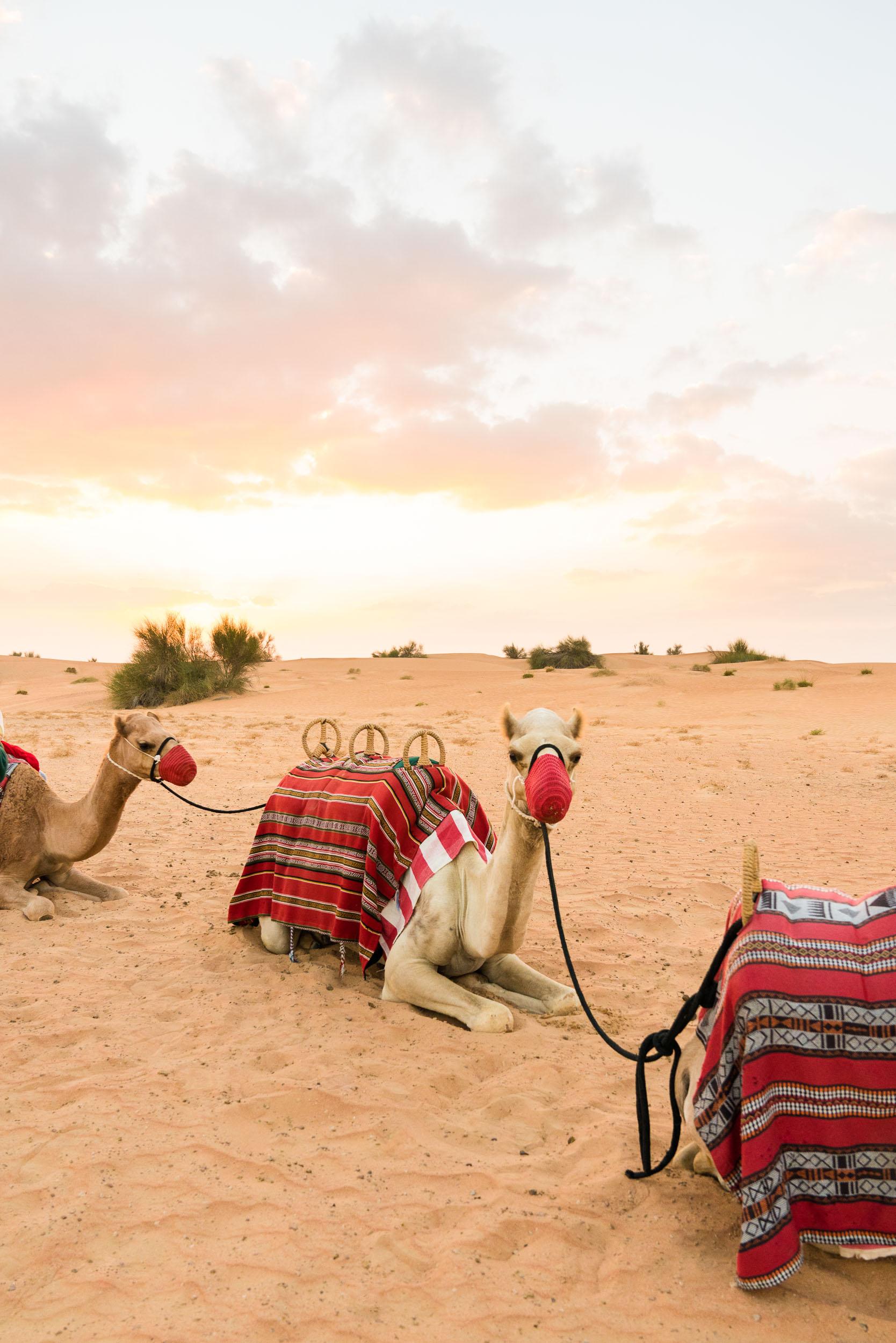 the_getaway_edit_al_maha_desert_resort_and_spa-10.jpg