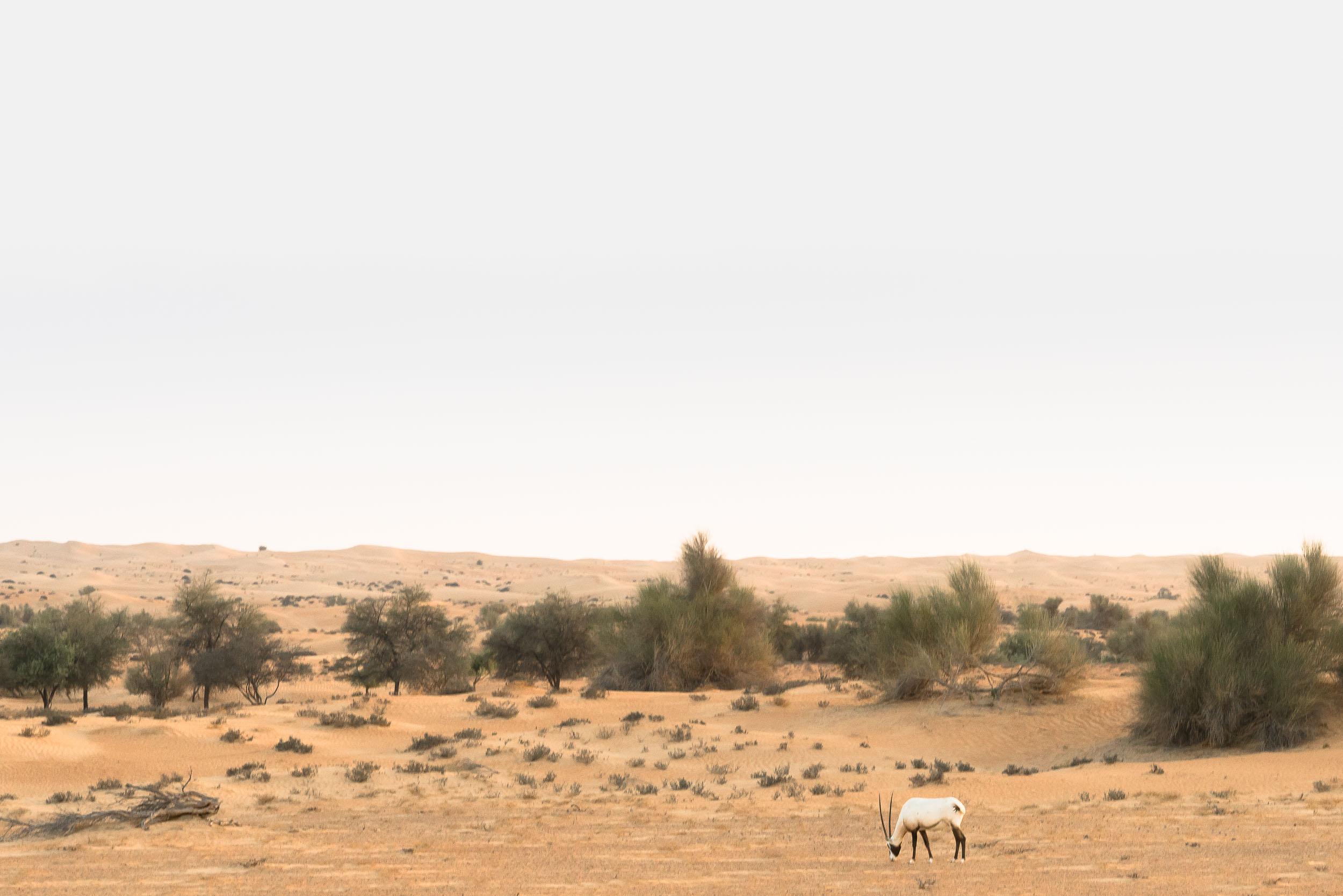 the_getaway_edit_al_maha_desert_resort_and_spa-9.jpg