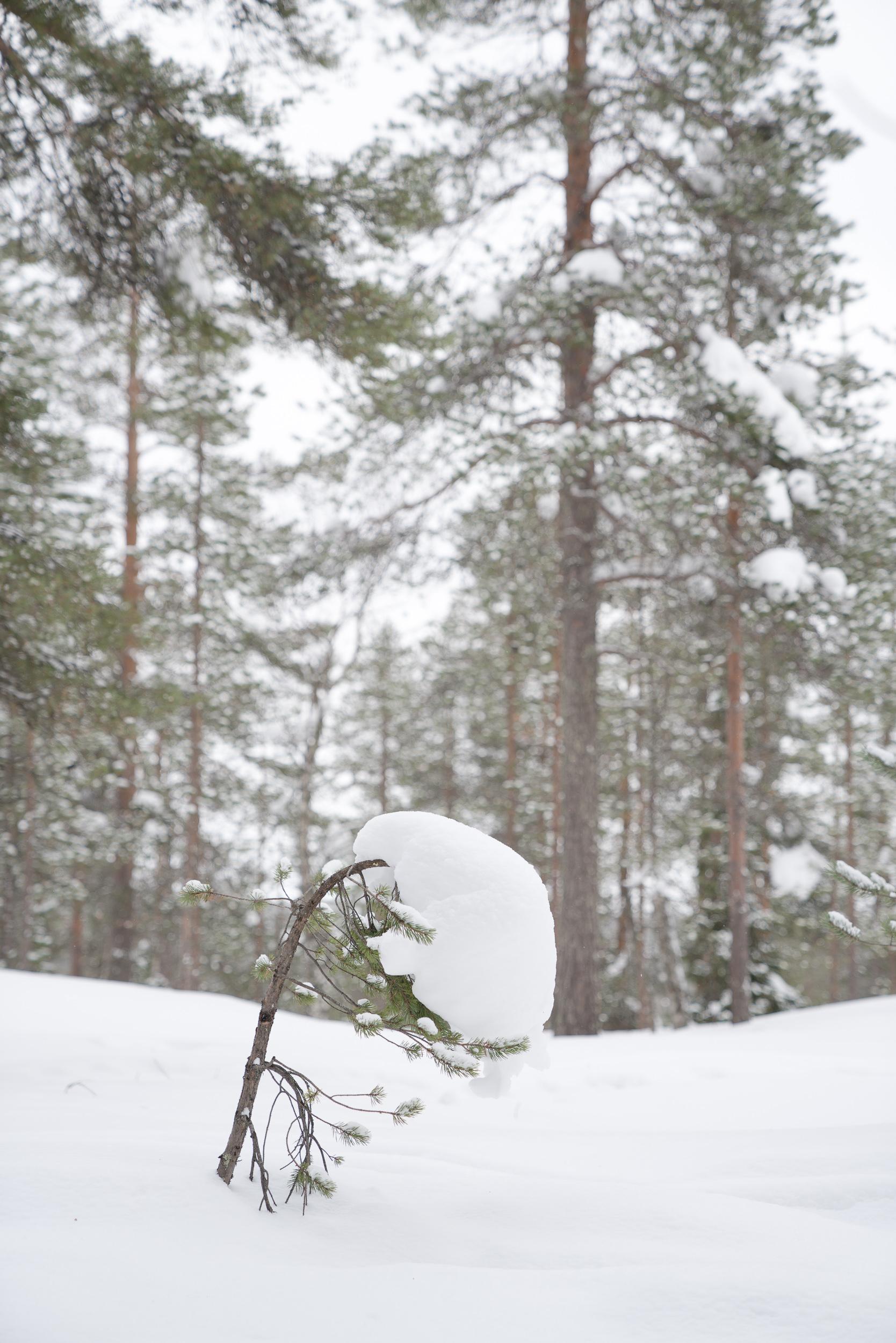 the_getaway_edit_finland_rovaniemi_arctic_treehouse-15.jpg