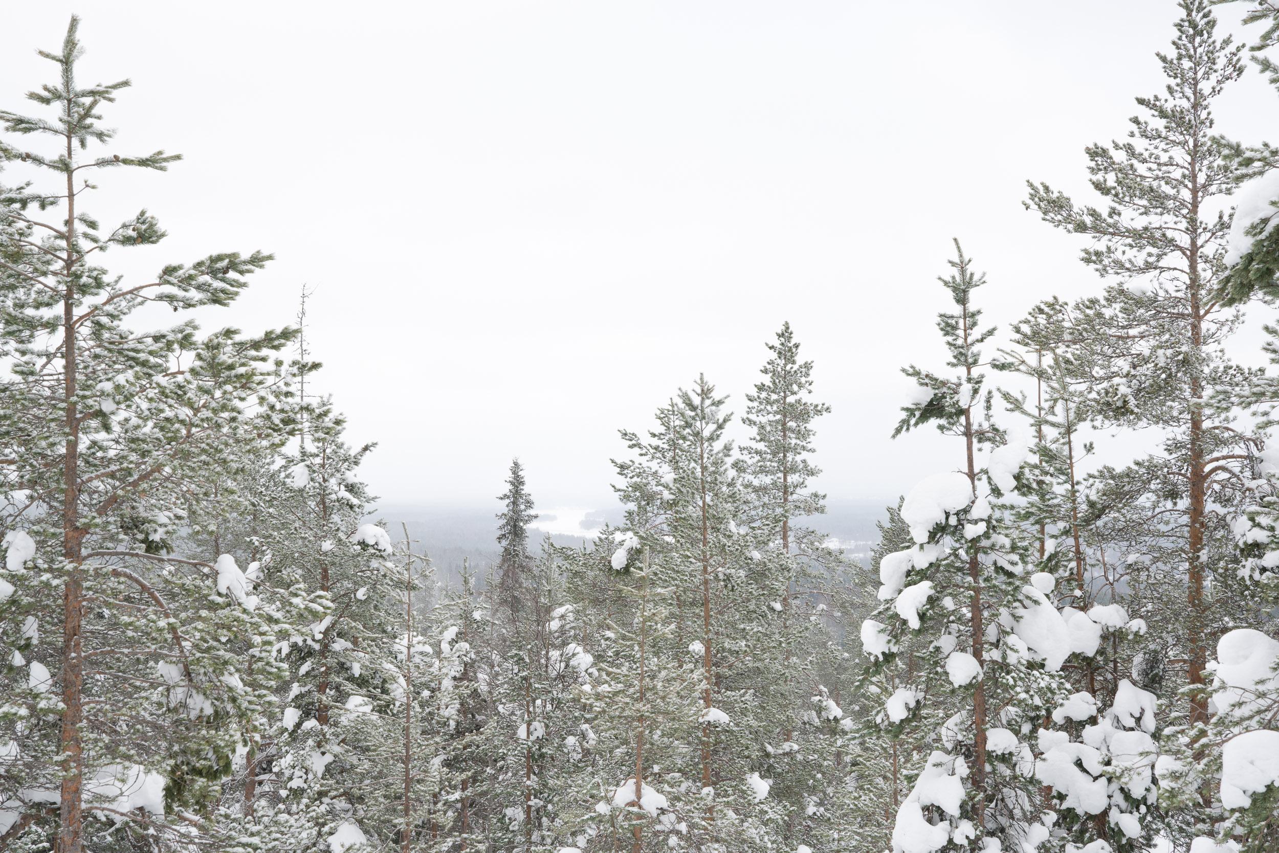 the_getaway_edit_finland_rovaniemi_arctic_treehouse-13.jpg
