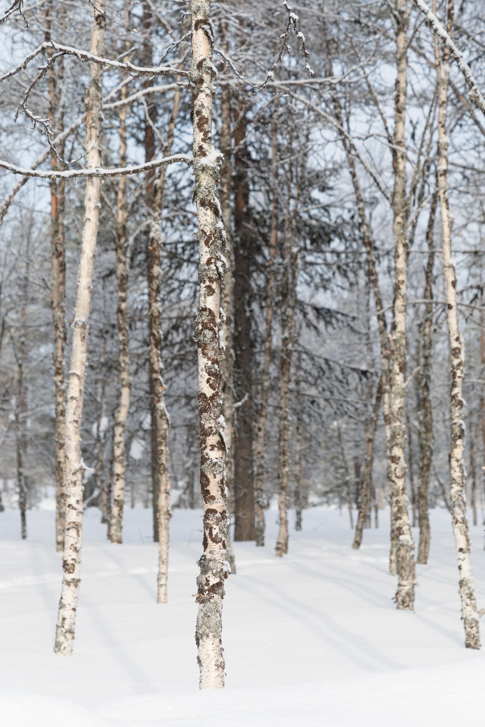 the_getaway_edit_finland_kakslauttanen_arctic_resort-5.jpg