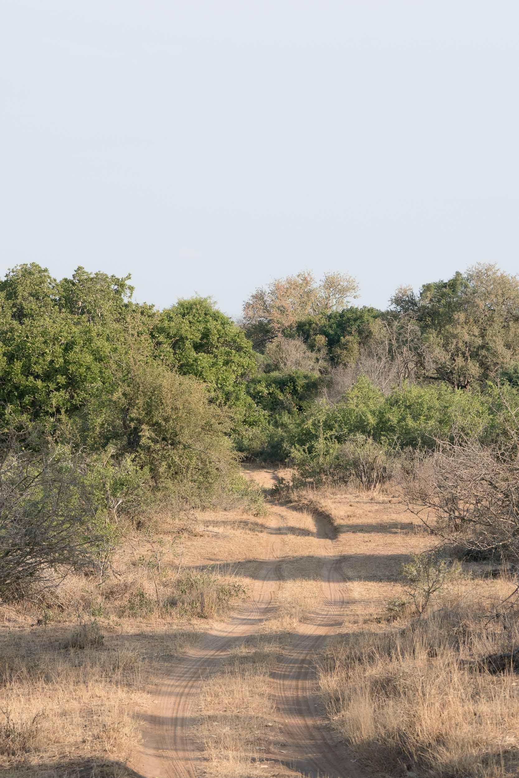 the_getaway_edit_south_africa_safari_lion_sands_game_reserve-1.jpg