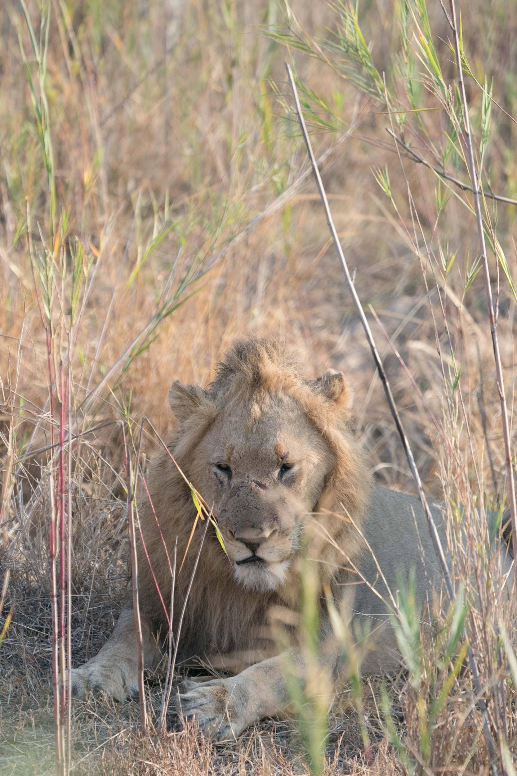 the_getaway_edit_south_africa_safari_lion_sands_game_reserve-4.jpg