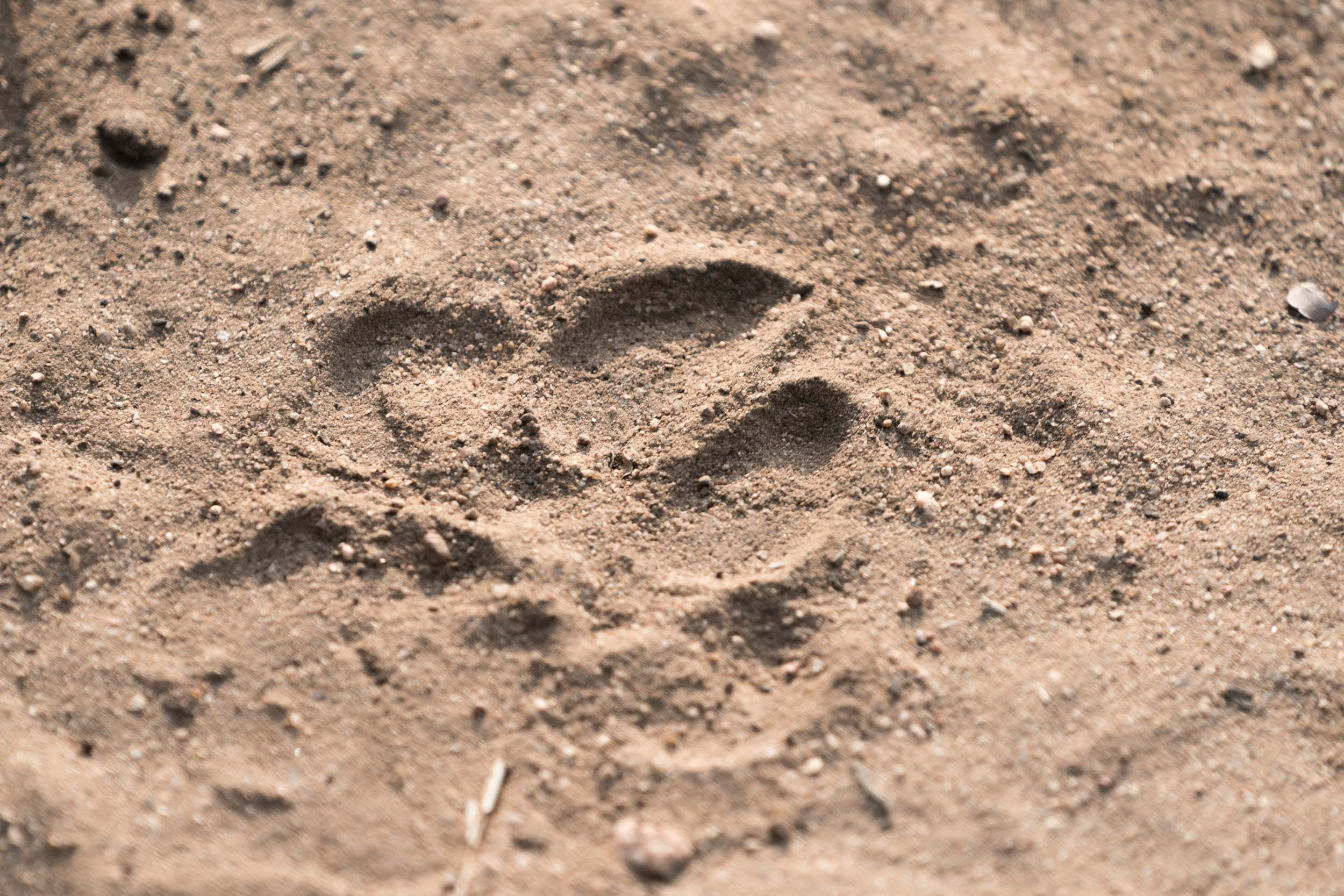 the_getaway_edit_south_africa_safari_lion_sands_game_reserve-23.jpg