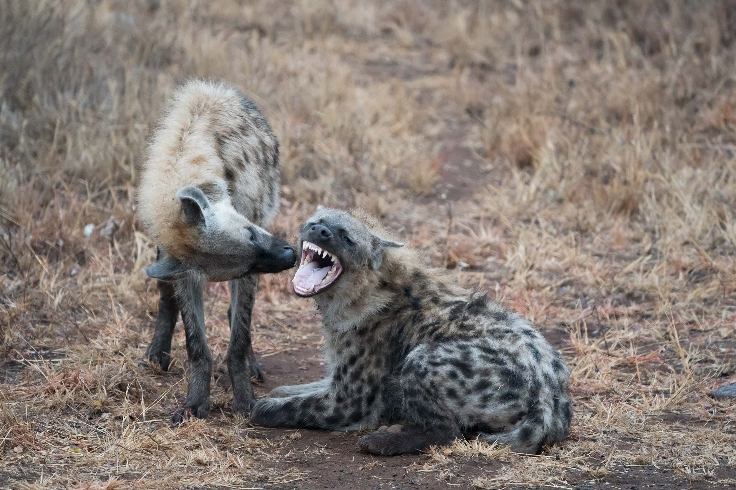the_getaway_edit_south_africa_safari_lion_sands_game_reserve-34.jpg