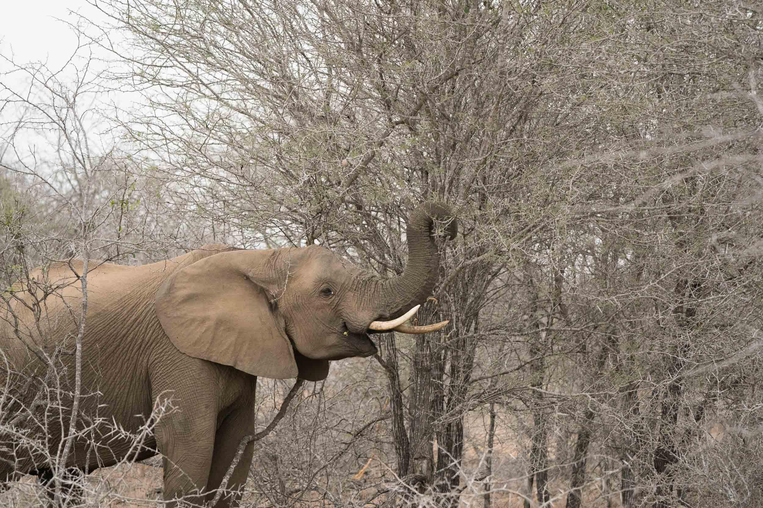 the_getaway_edit_south_africa_safari_lion_sands_game_reserve-30.jpg