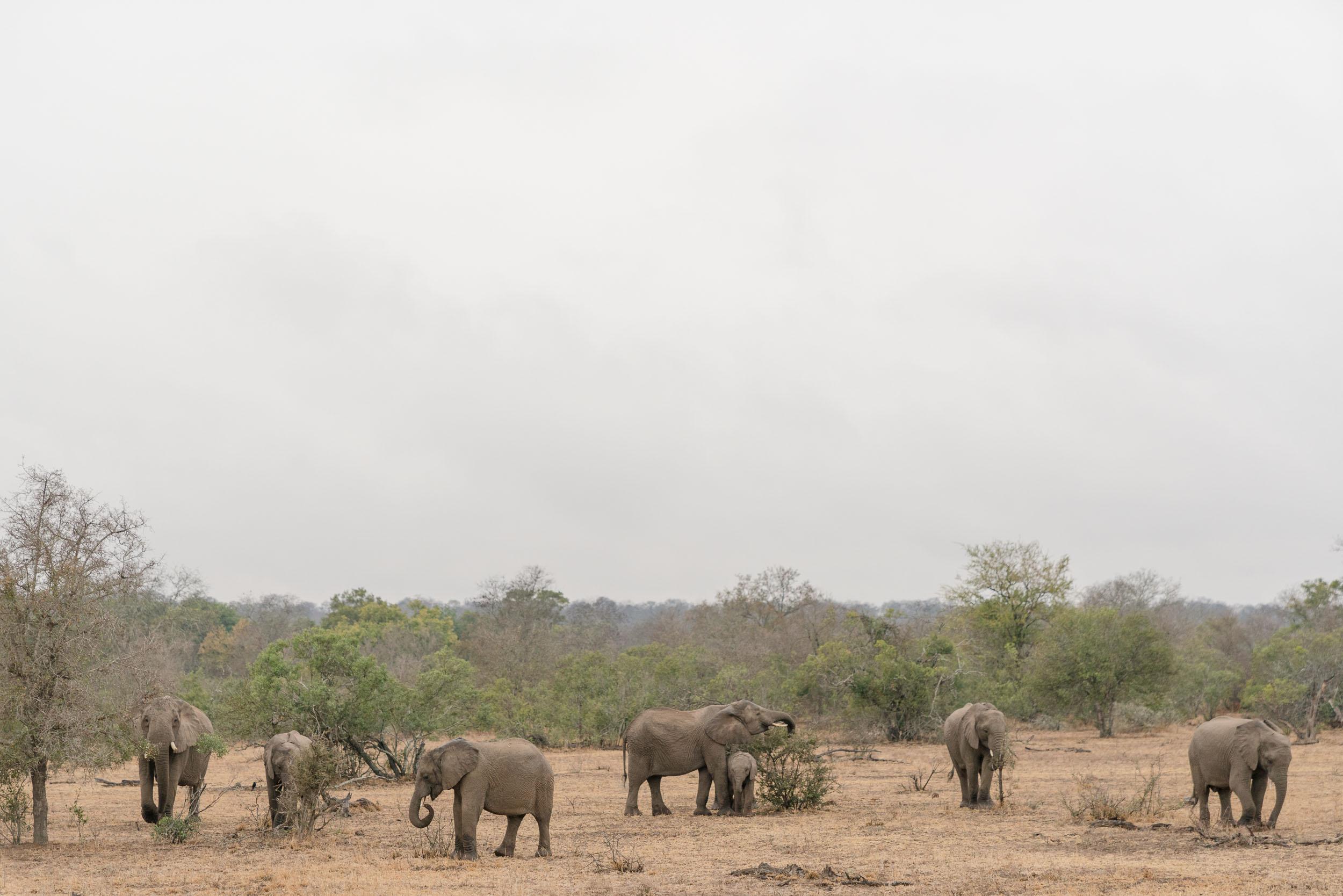 the_getaway_edit_south_africa_safari_lion_sands_game_reserve-38.jpg