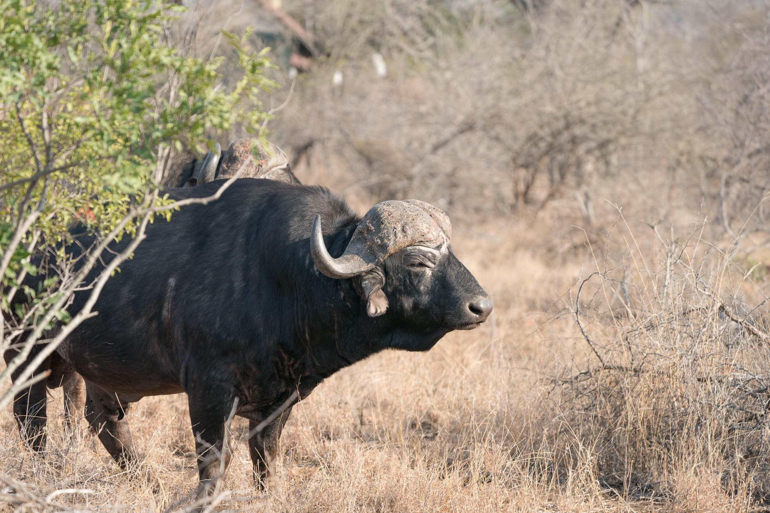 the_getaway_edit_south_africa_safari_lion_sands_game_reserve-5.jpg