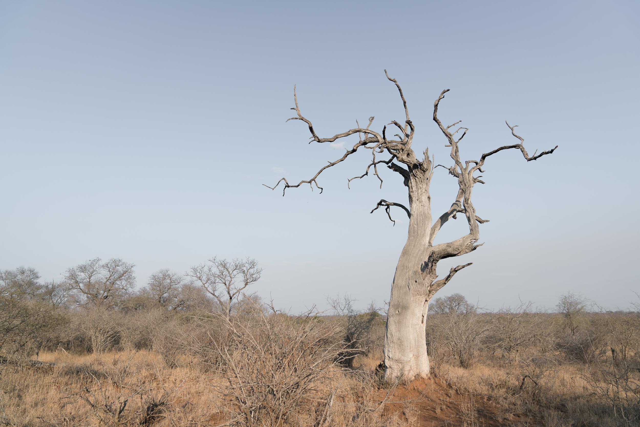 the_getaway_edit_south_africa_safari_lion_sands_game_reserve-2.jpg