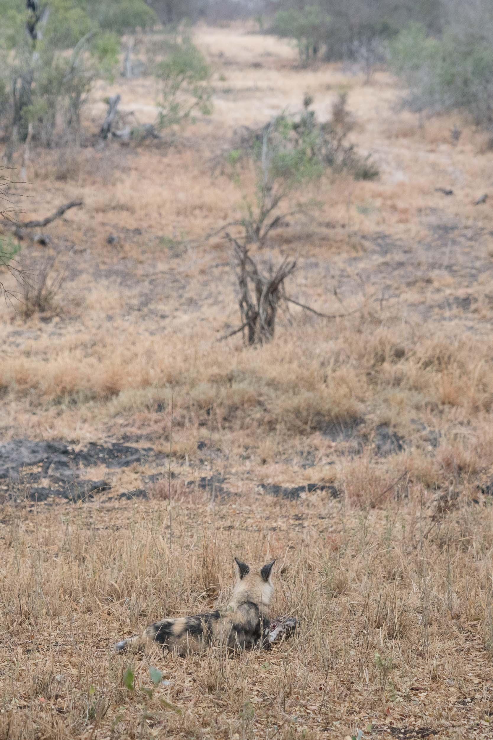 the_getaway_edit_south_africa_safari_lion_sands_game_reserve-41.jpg