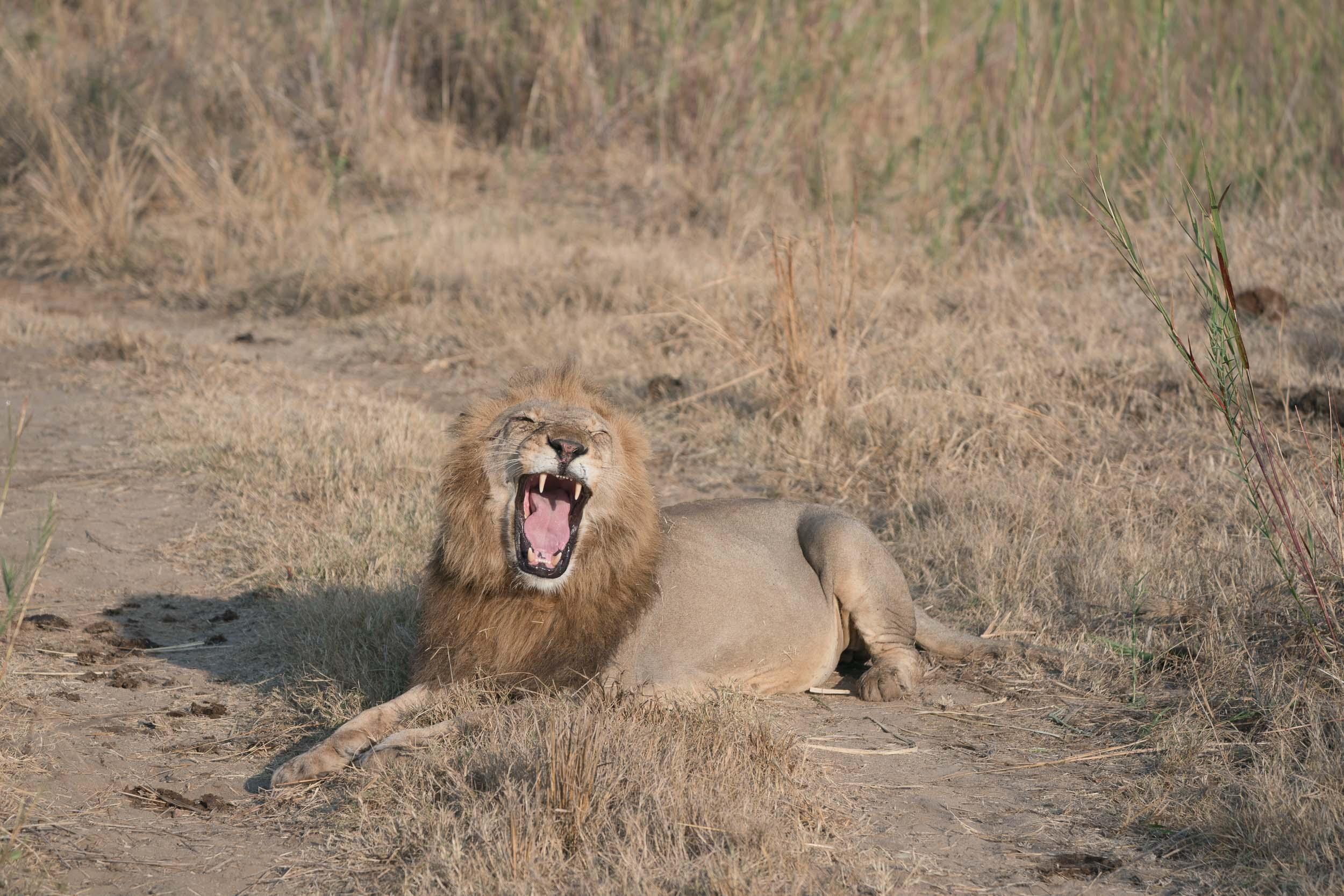 the_getaway_edit_south_africa_safari_lion_sands_game_reserve-3.jpg