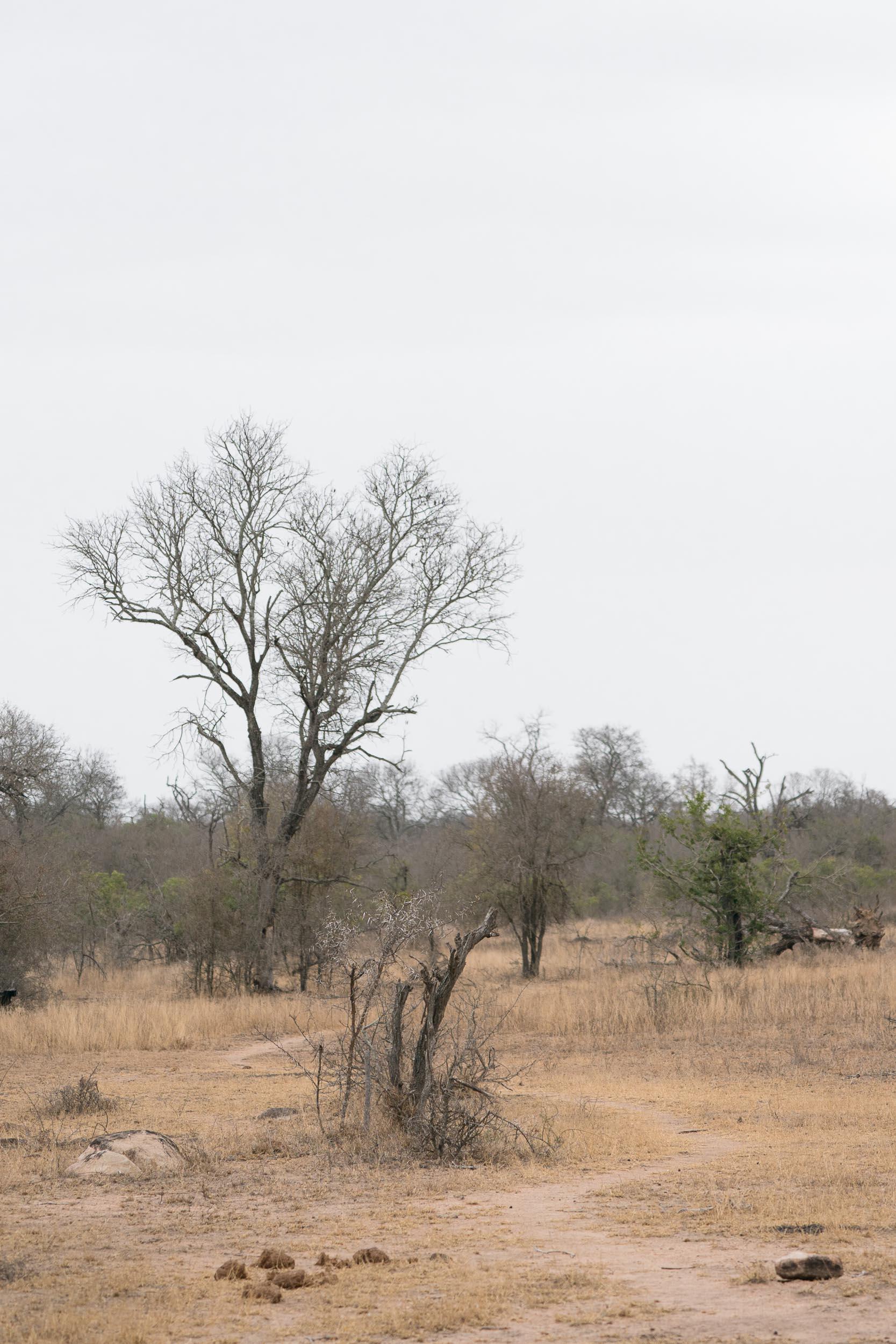 the_getaway_edit_south_africa_safari_lion_sands_game_reserve-26.jpg