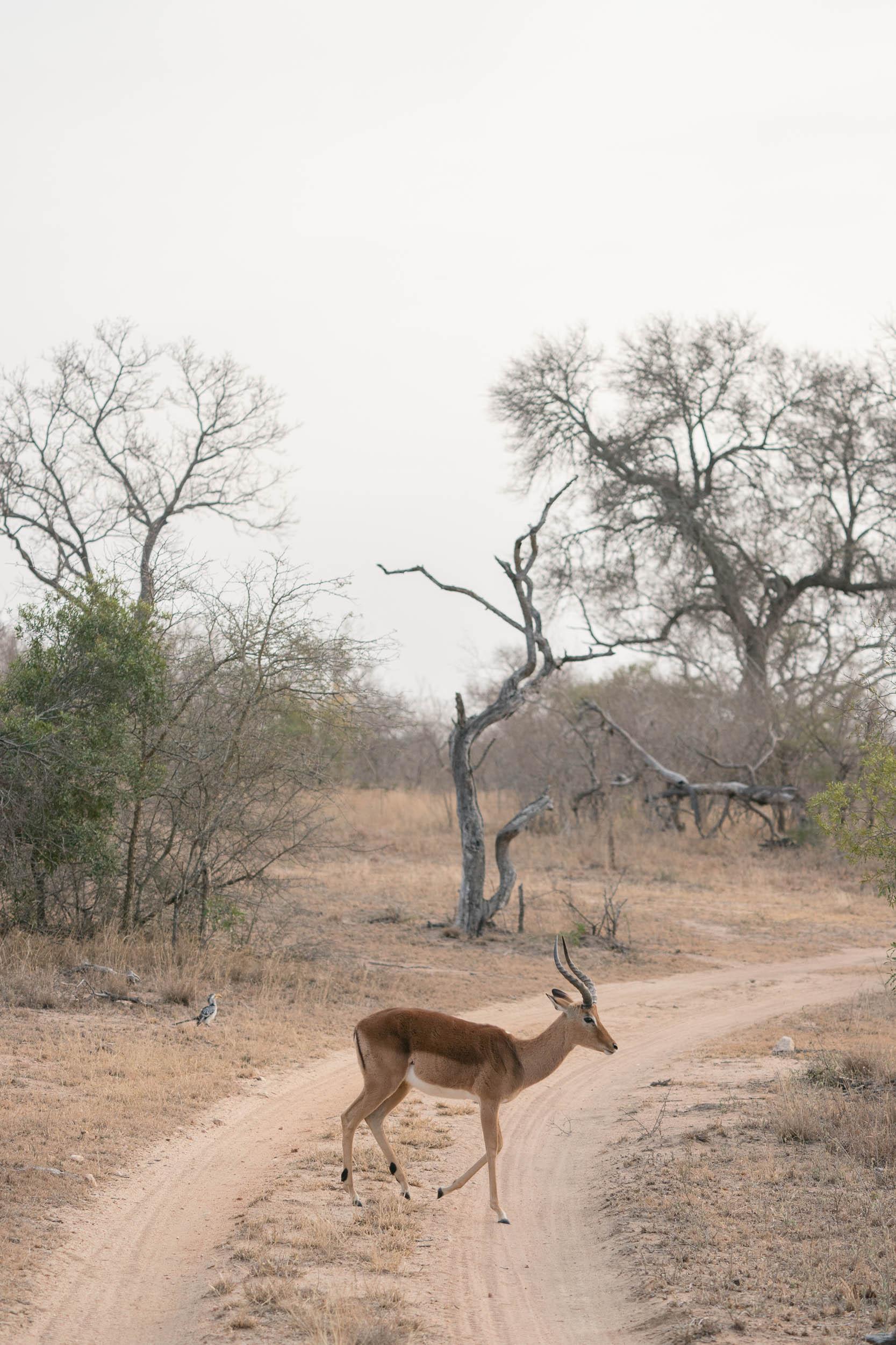 the_getaway_edit_south_africa_safari_lion_sands_game_reserve-20.jpg
