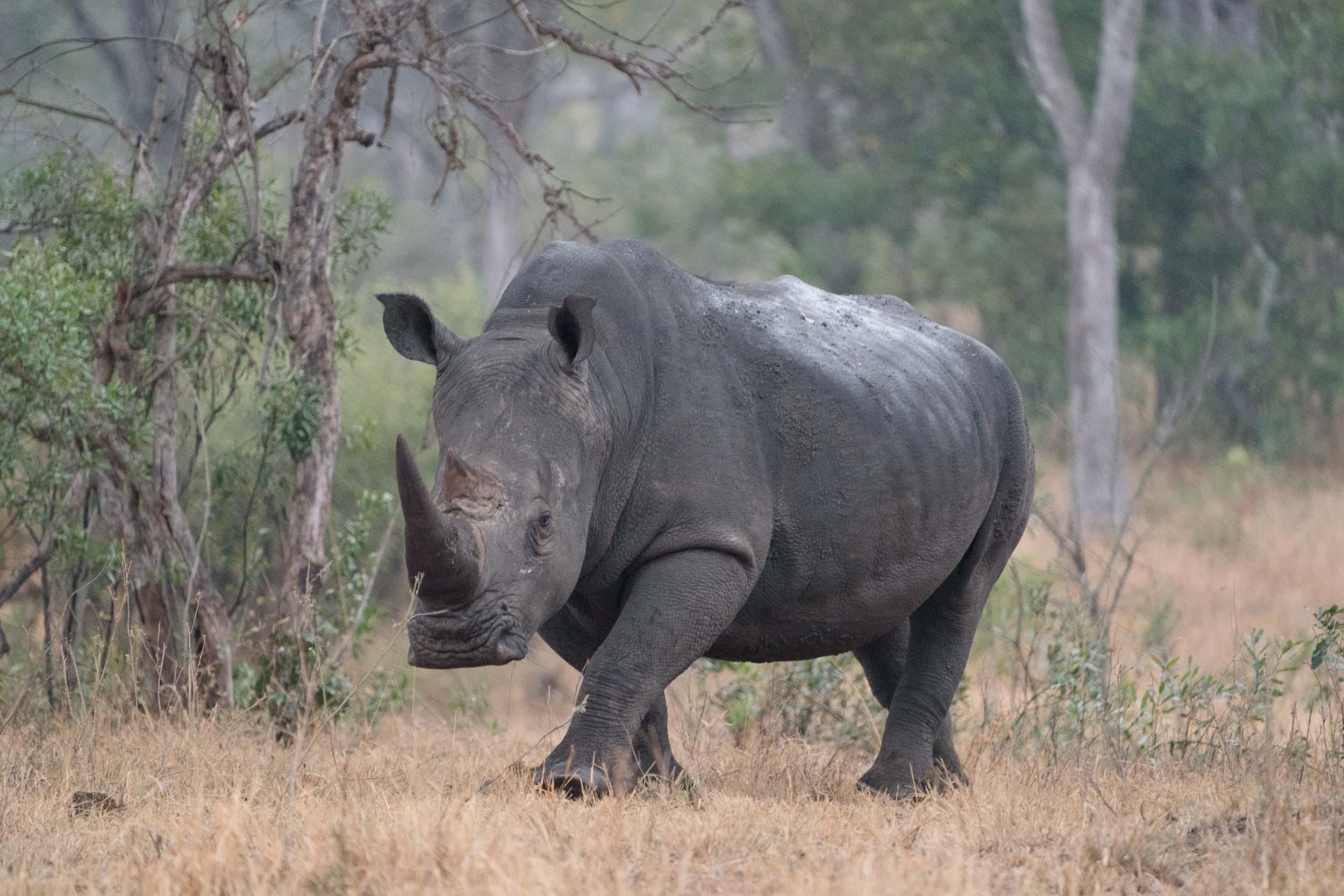 the_getaway_edit_south_africa_safari_lion_sands_game_reserve-36.jpg