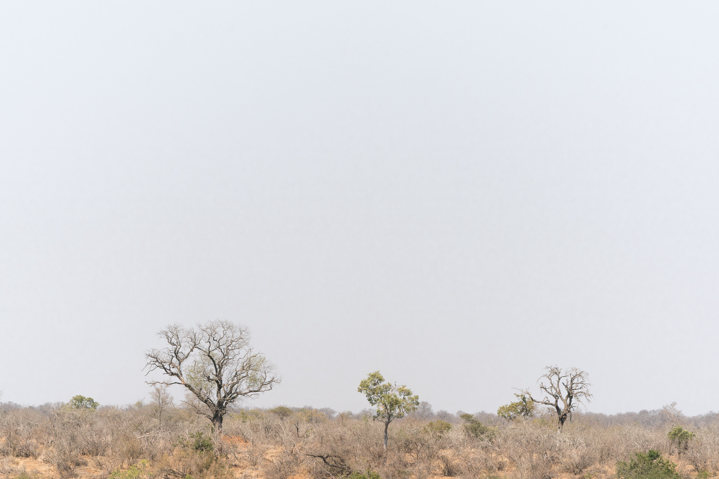 the_getaway_edit_south_africa_safari_lion_sands_game_reserve-6.jpg