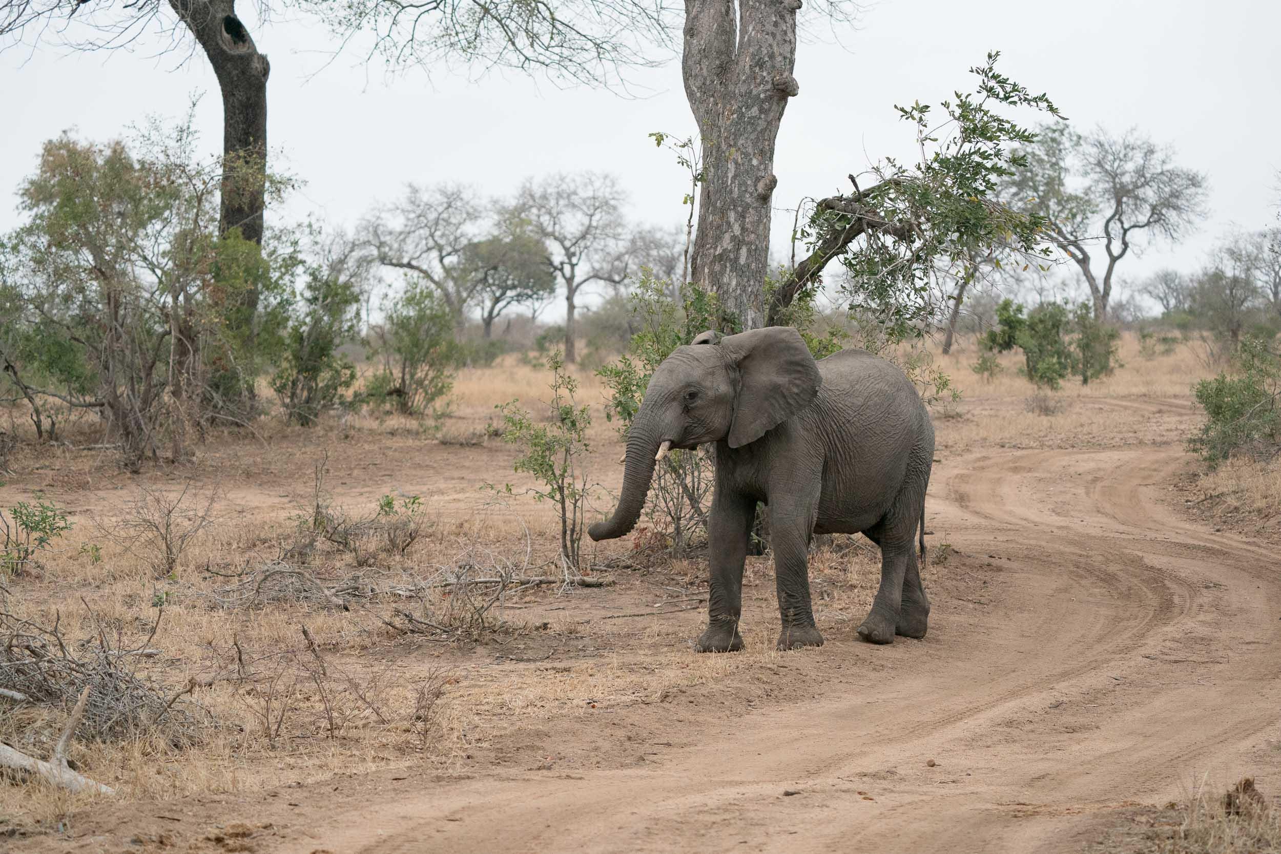 the_getaway_edit_south_africa_safari_londolozi_game_reserve-5.jpg