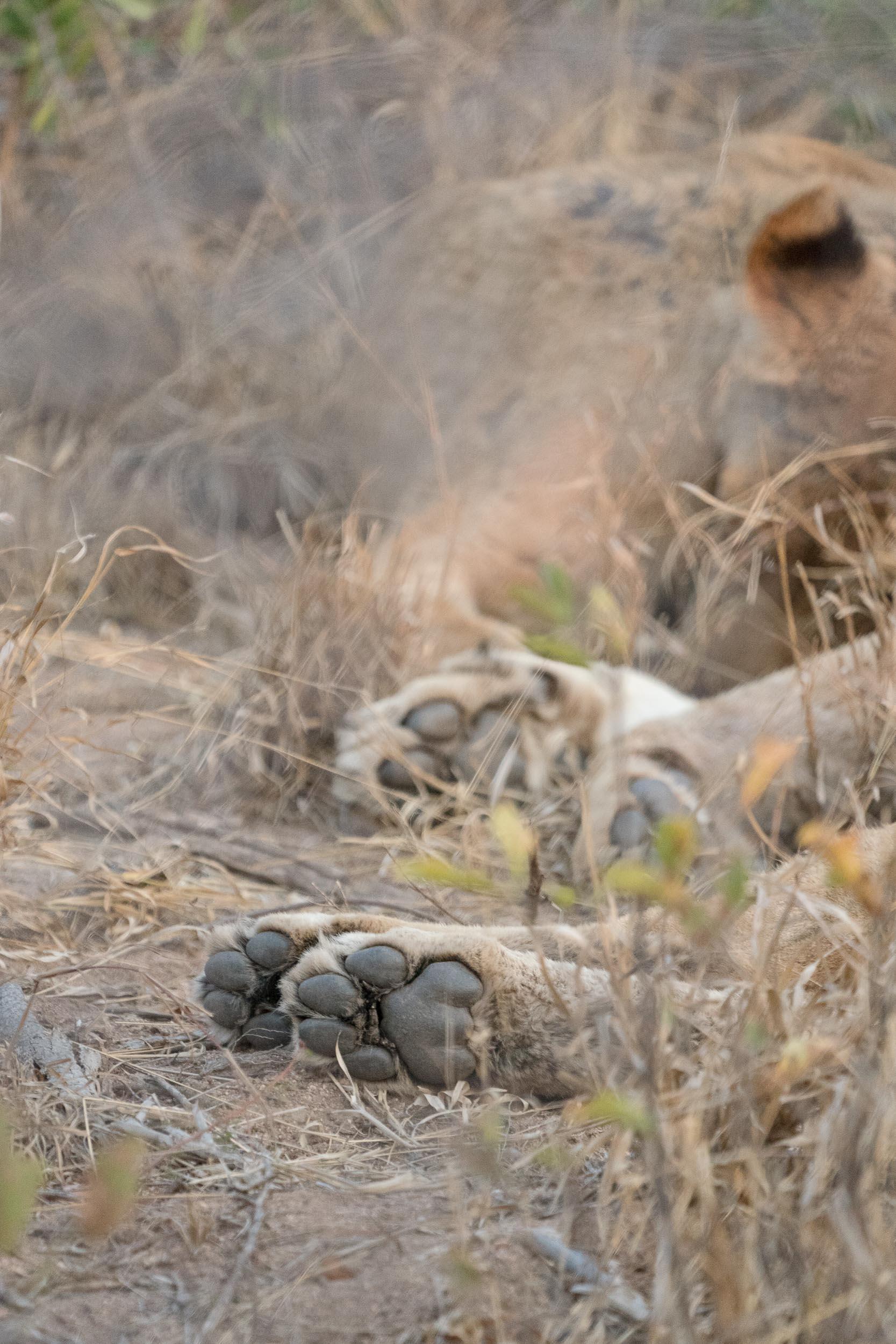 the_getaway_edit_south_africa_safari_londolozi_game_reserve-30.jpg
