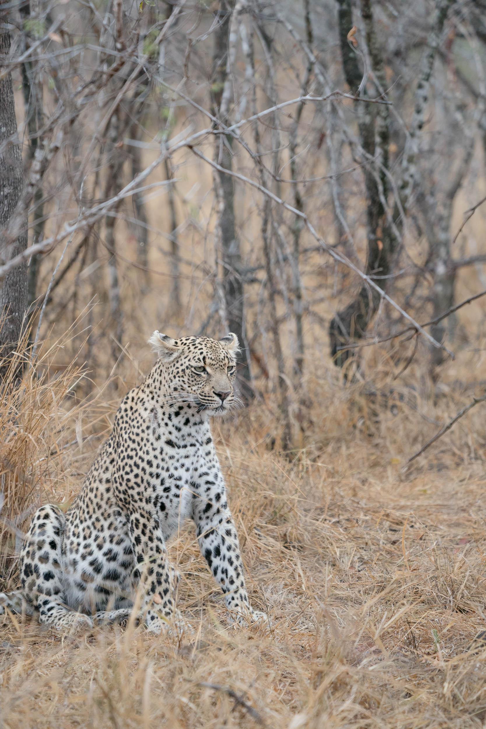 the_getaway_edit_south_africa_safari_londolozi_game_reserve-14.jpg