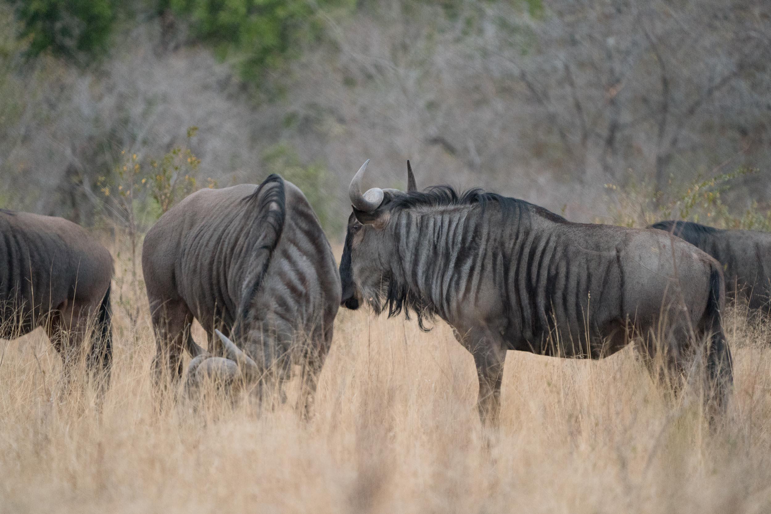 the_getaway_edit_south_africa_safari_londolozi_game_reserve-4.jpg