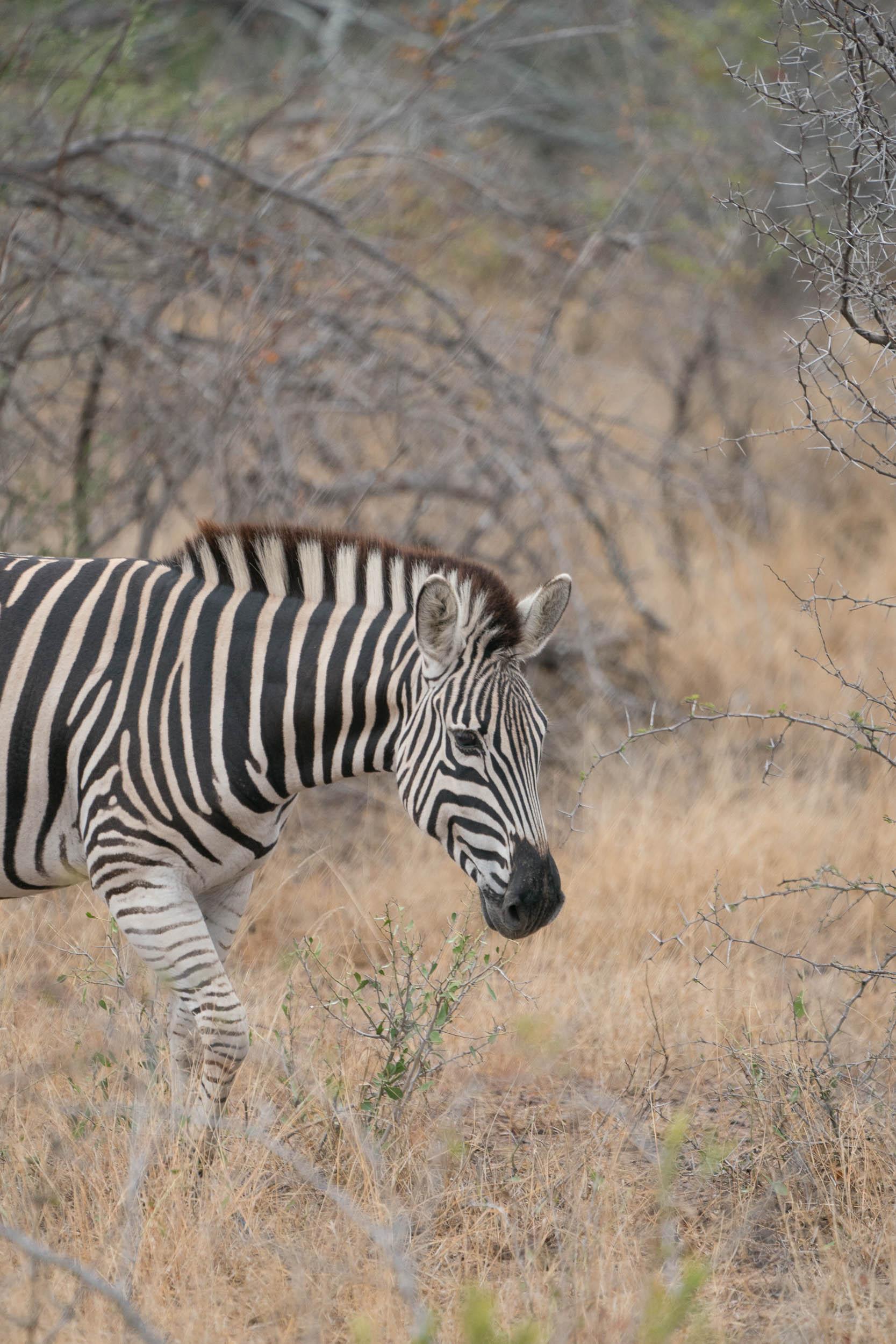 the_getaway_edit_south_africa_safari_londolozi_game_reserve-20.jpg