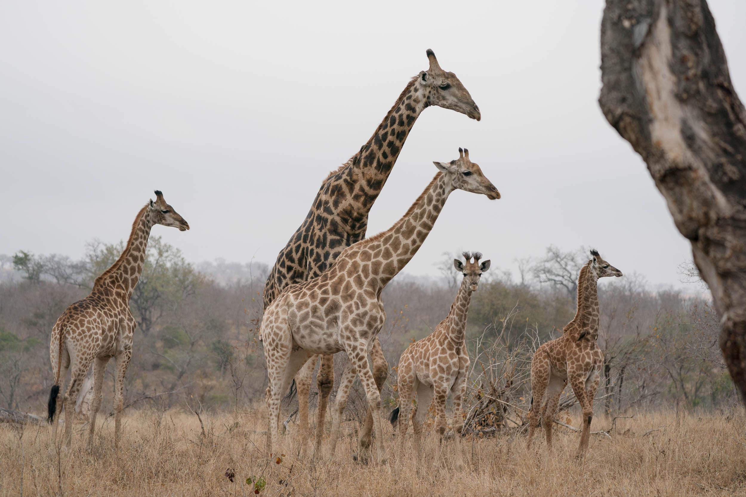 the_getaway_edit_south_africa_safari_londolozi_game_reserve-21.jpg