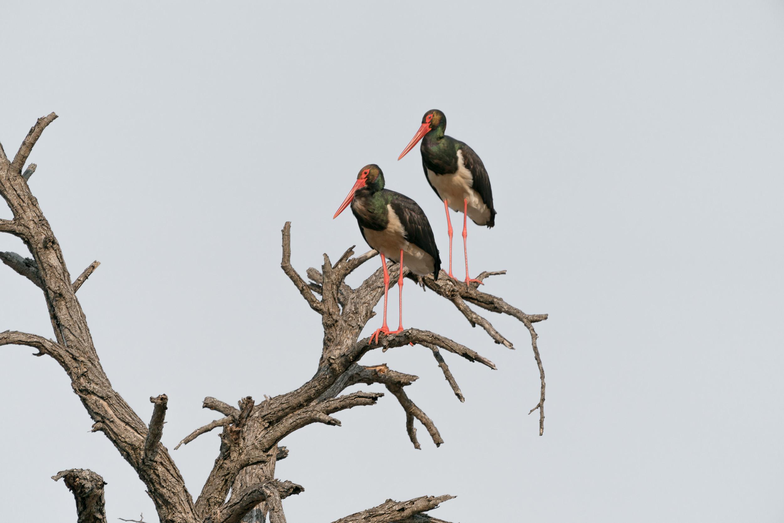 the_getaway_edit_south_africa_safari_londolozi_game_reserve-27.jpg