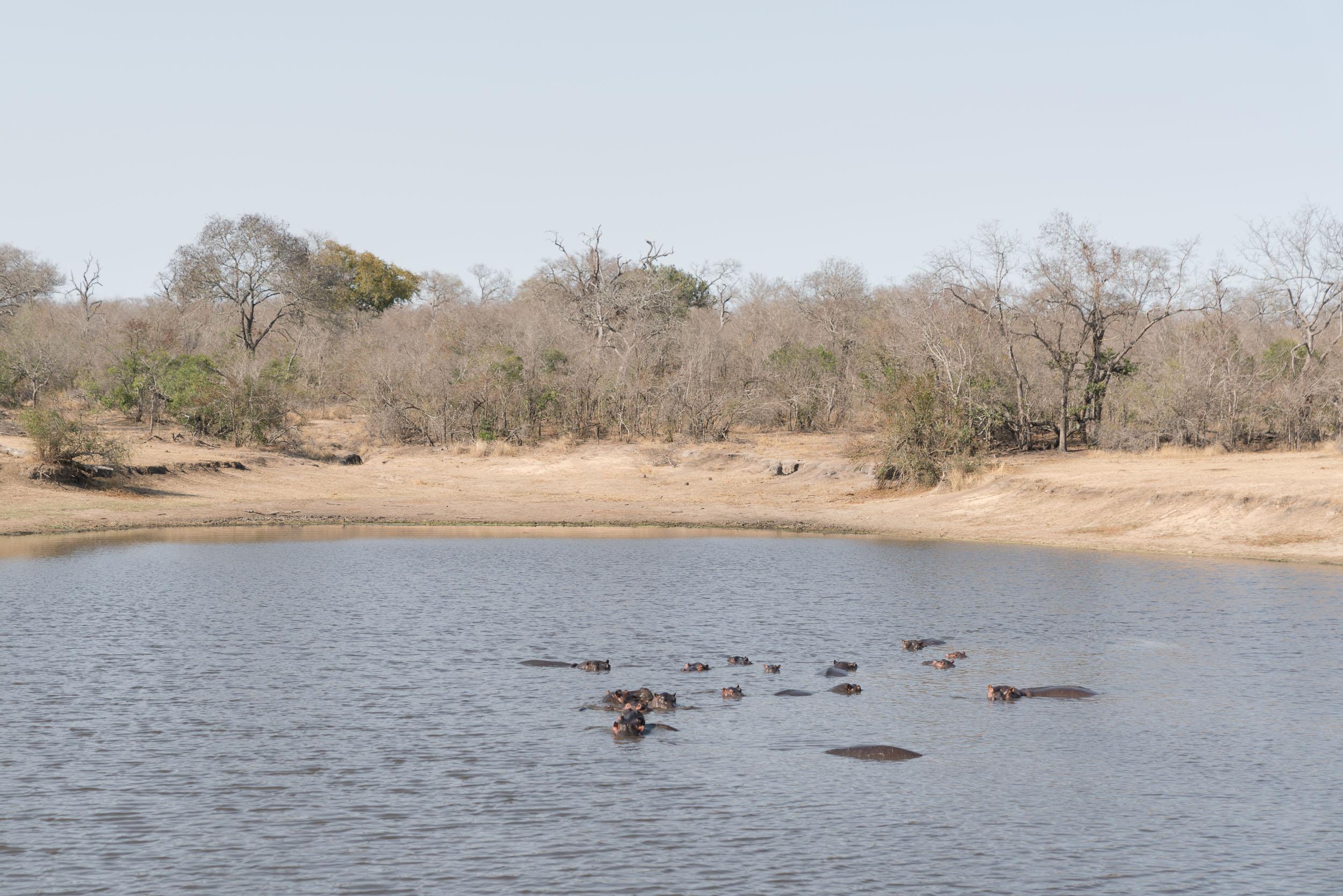 the_getaway_edit_south_africa_safari_londolozi_game_reserve-38.jpg