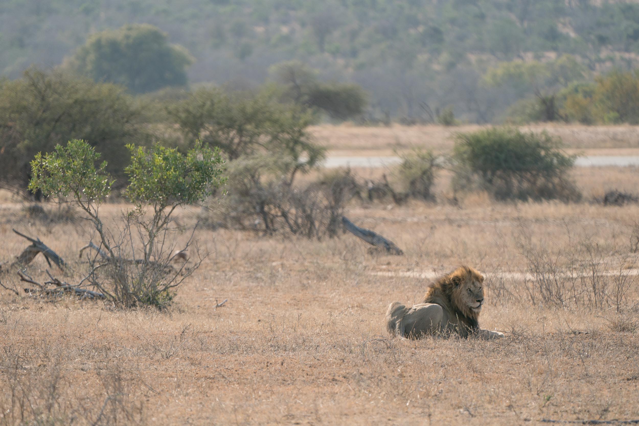 the_getaway_edit_south_africa_safari_londolozi_game_reserve-37.jpg
