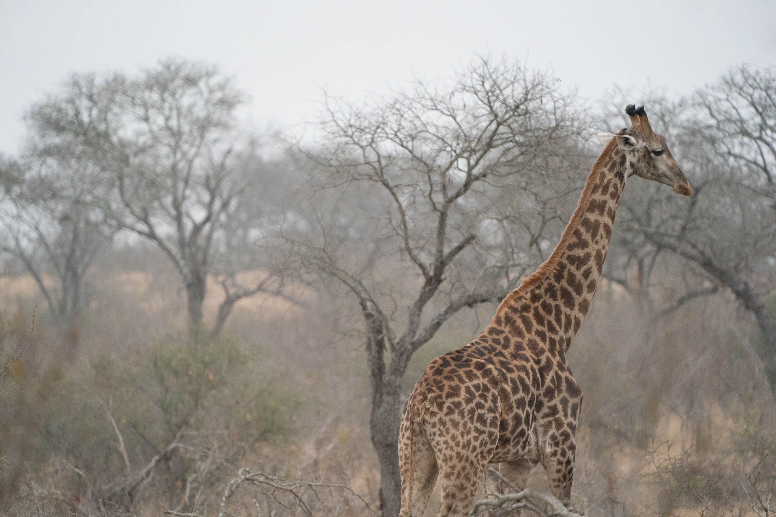 the_getaway_edit_south_africa_safari_londolozi_game_reserve-7.jpg