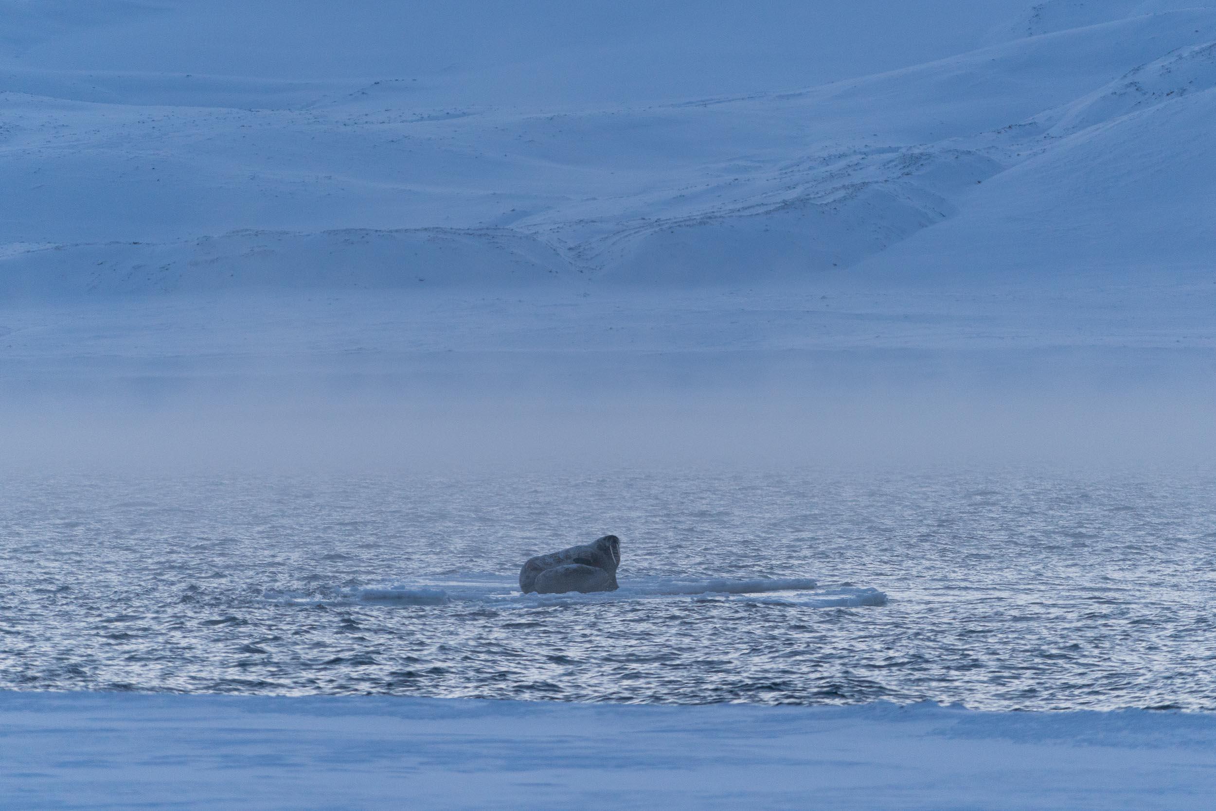the_getaway_edit_svalbard_isfjord_radio-5.jpg