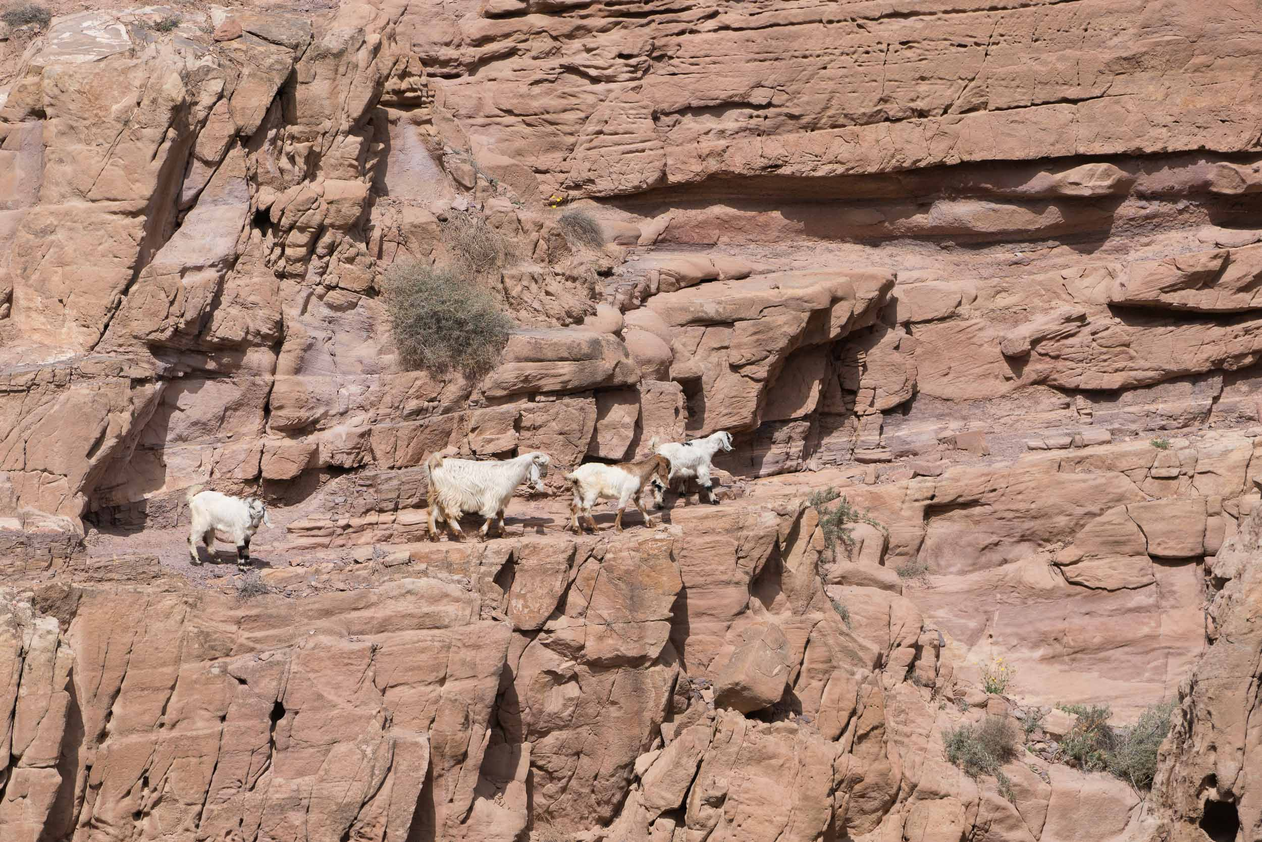 the_getaway_edit_jordan_dana_biosphere-10.jpg