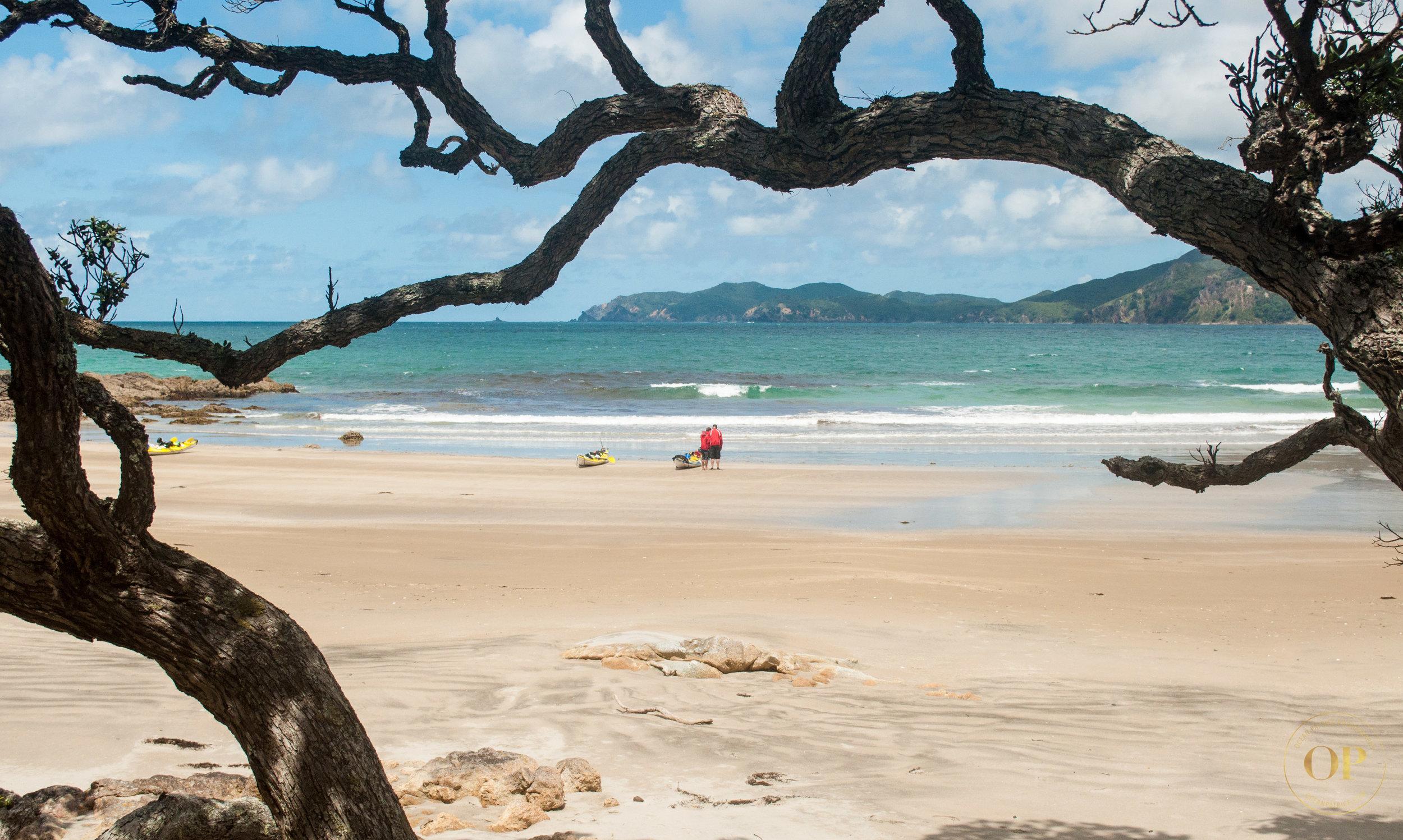GBI Auckland Sea Kayaks-28-2.jpg