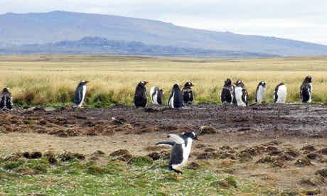 The Falklands are just like Dartmoor, but with added penguins. Photograph: Helen Czerski