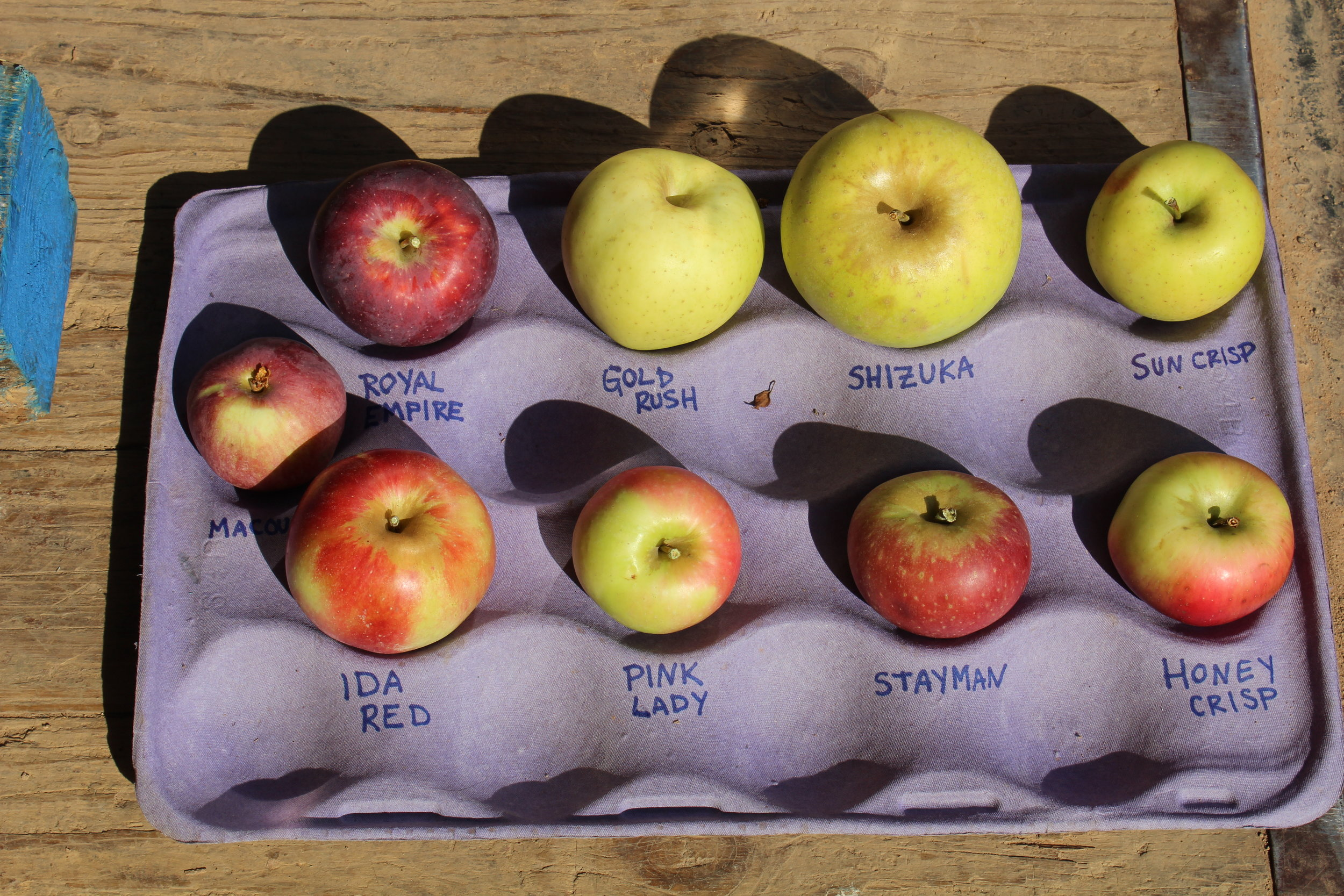 Adams County Apples