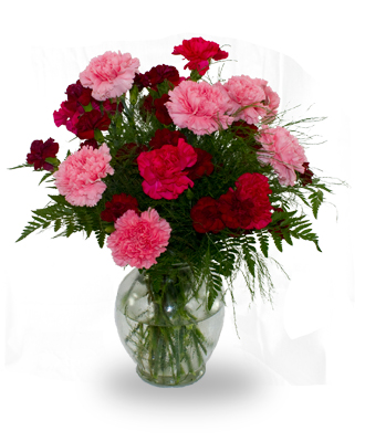 Dozen Carnations Arrangement - a mix of 12 carnations mixed with stems of mini carnations arranged in a vase with greenery. *Colours may vary from photo depending on availability. ($60)