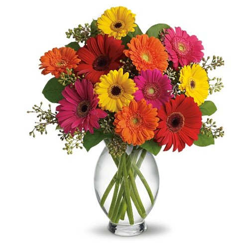 Dozen Gerbera Daisies Arrangement - 12 mixed coloured gerbera daisies arranged in a vase with lovely greenery. (100)