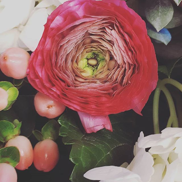 #layeruponlayer #ranunculus #thinkspring #pureperfection #pammettsflowers #ptbolove #givelocal #supportlocal #ptbolove